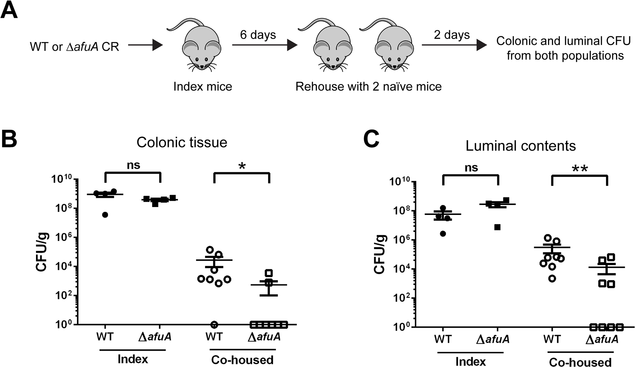 <i>C</i>. <i>rodentium</i> requires AfuA for efficient host-to-host transmission.