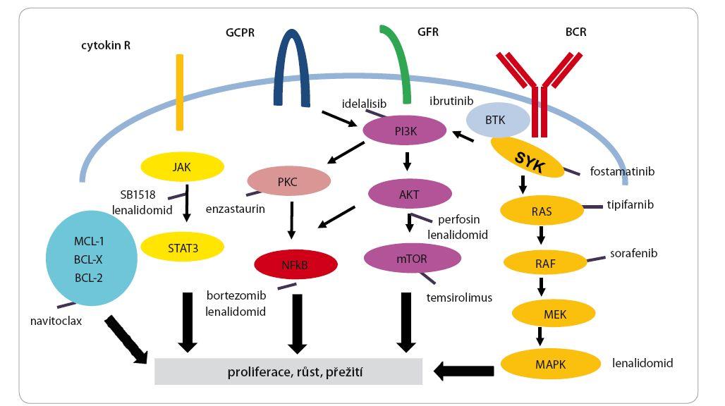 Schematické znázornění jednotlivých klíčových drah a léčebných cílů v lymfomové buňce.