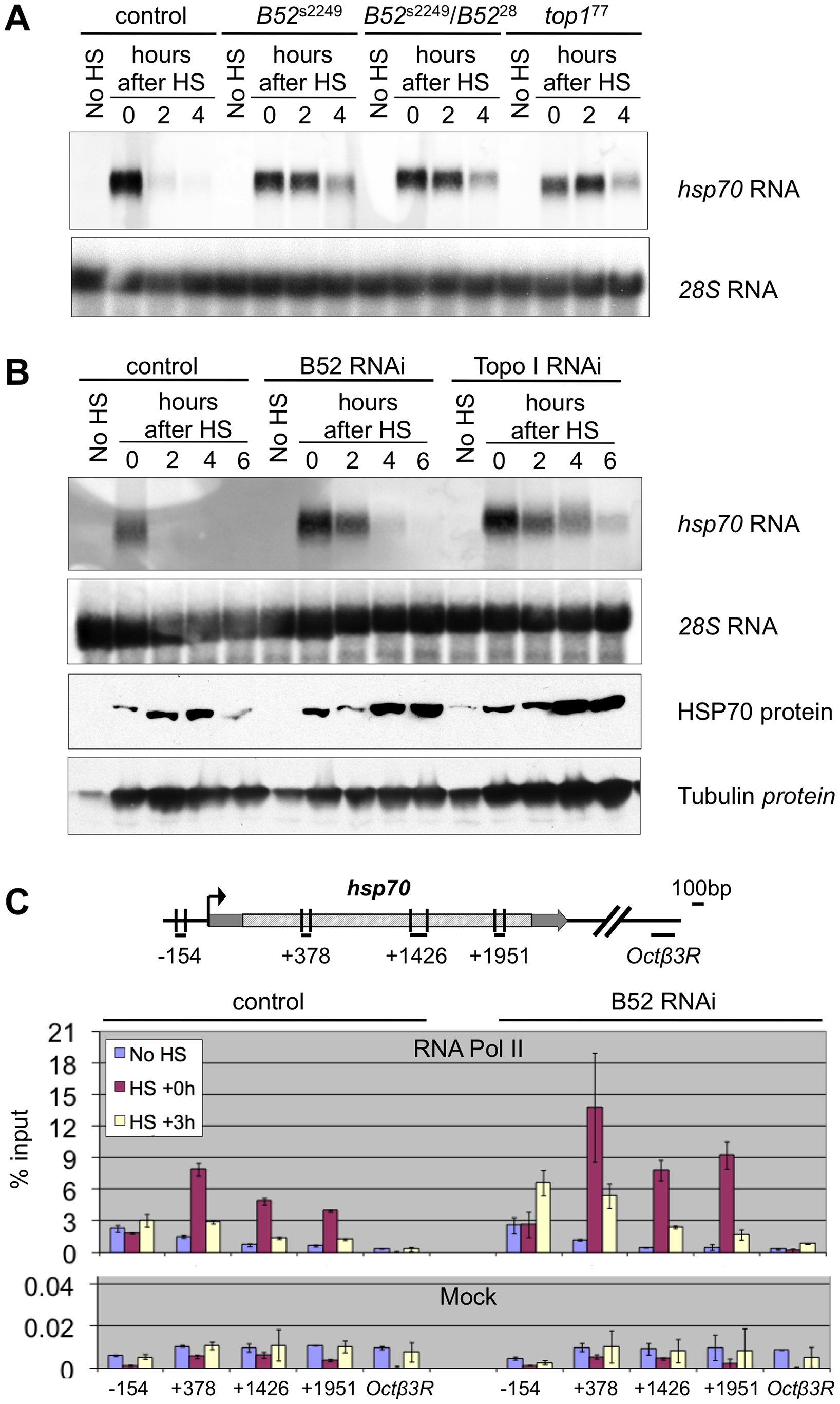 B52 and Topo I are required for <i>hsp70</i> transcription shutdown.