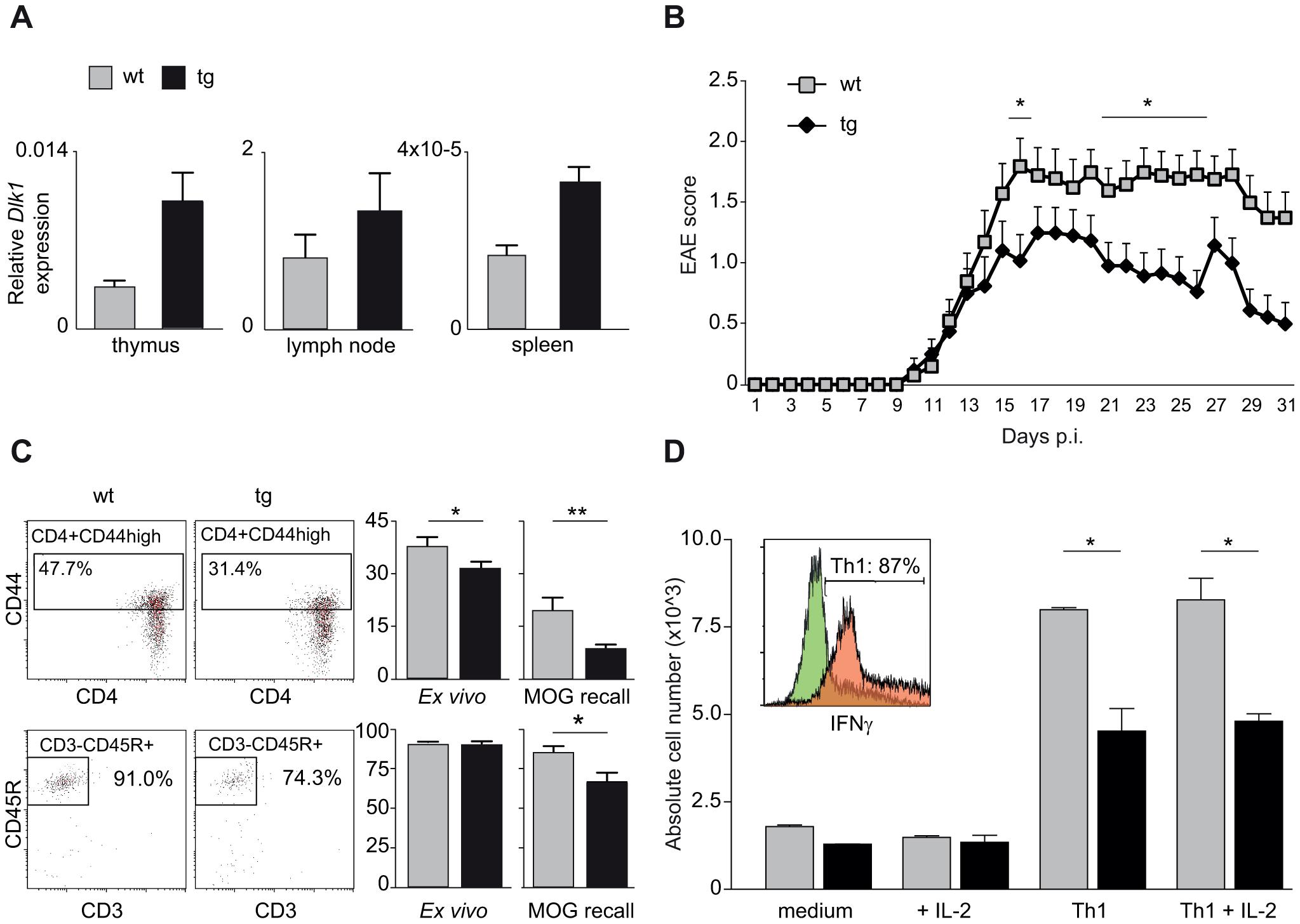 Transgenic overexpression of Dlk1 modulates EAE severity and adaptive immune responses.