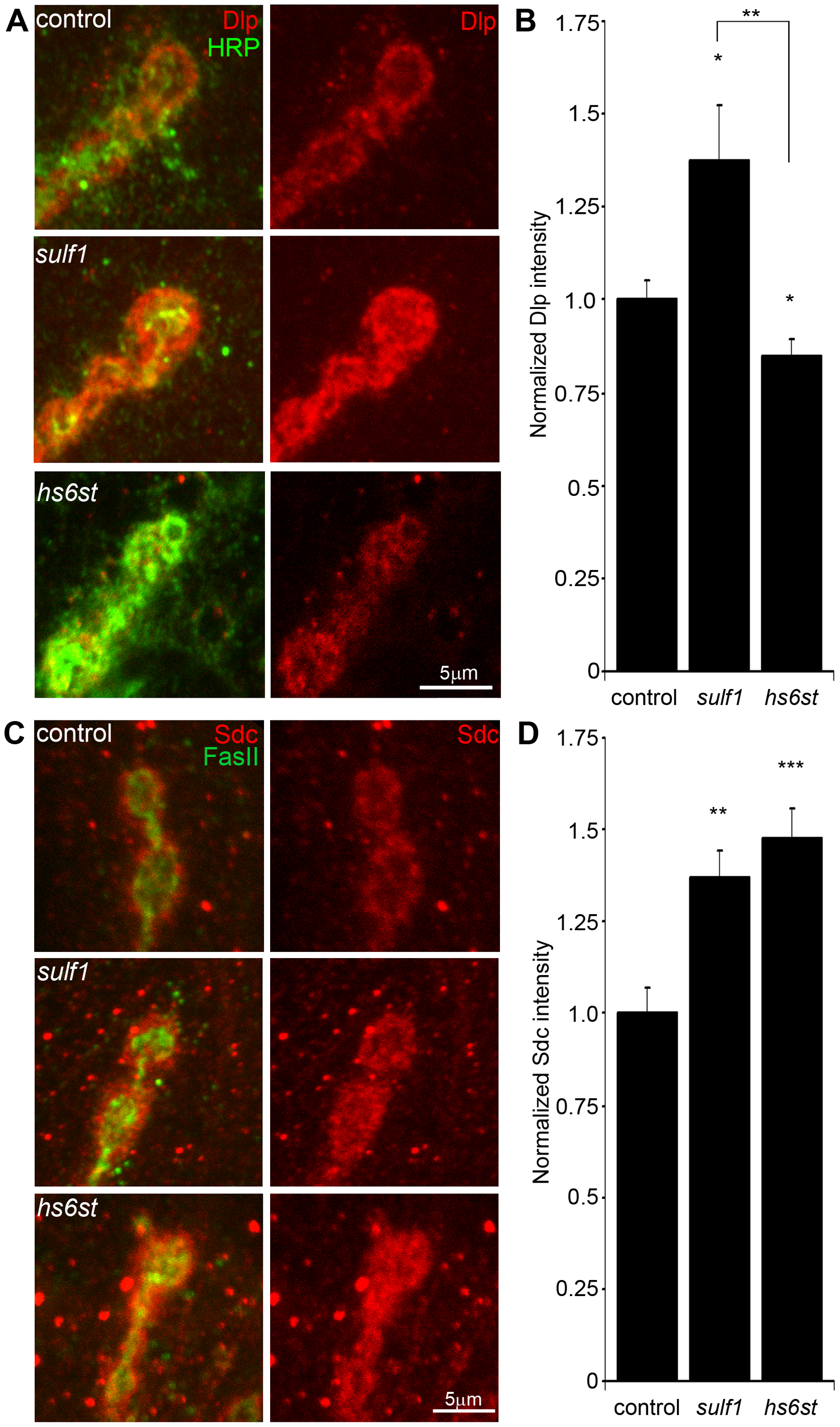 Synaptic HSPG co-receptor abundance is modified by 6-O-S sulfation.