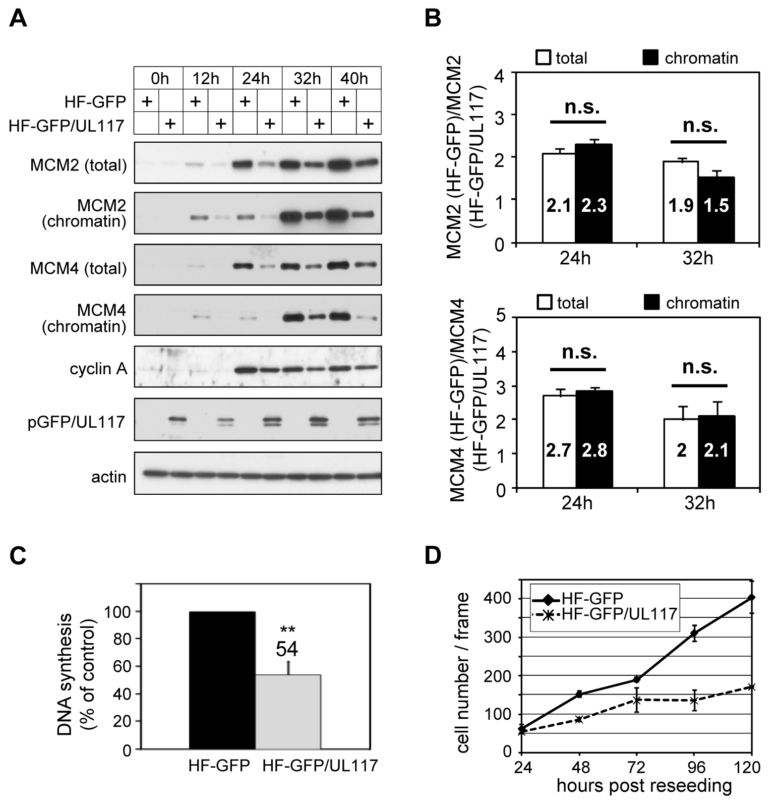 pUL117 was sufficient to inhibit proliferation and cellular DNA replication.