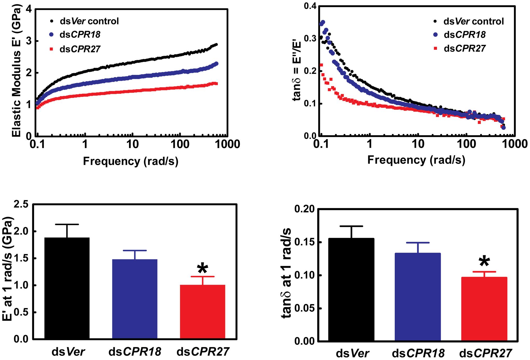 Mechanical properties of <i>Tribolium</i> ds<i>TcCPR27</i> and ds<i>TcCPR18</i> elytra.
