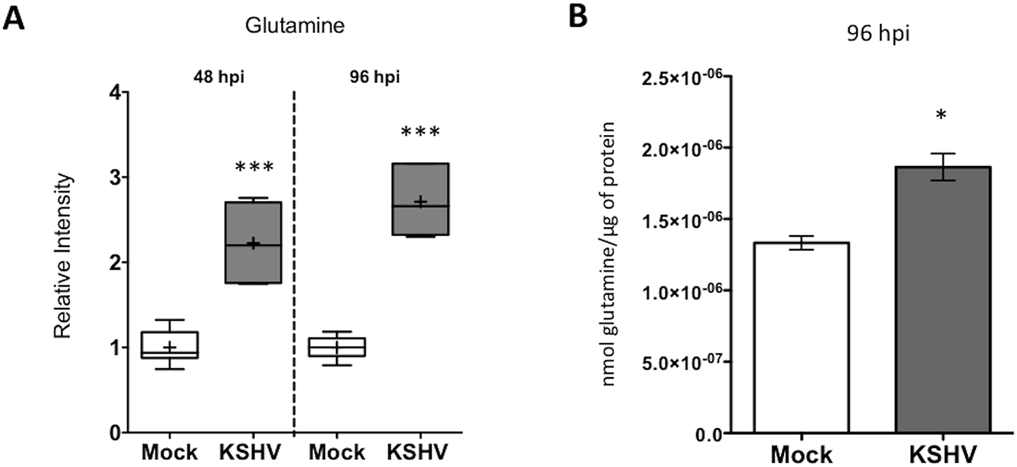 Glutamine uptake is increased by latent KSHV infection.
