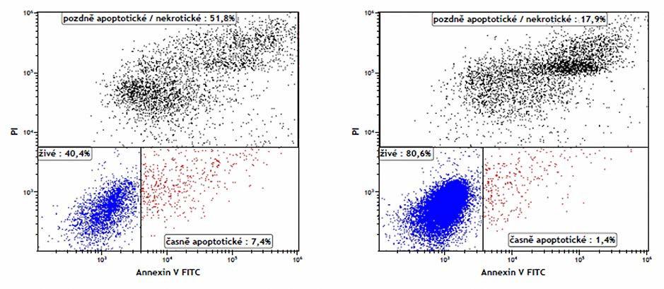 Stanovení apoptotických spermií průtokovou cytometrií v ejakulátu normozoospermiků. Annexin V – FITC (AN) a propidium jodid (PI) byly použity k rozdělení buněk na živé spermie (AN-PI-), časně apoptotické spermie (AN+ PI–), mrtvé a pozdně apoptotické spermie (PI+). Fyziologická hodnota je >50 % živých spermií v ejakulátu. Vlevo – ApoHigh vzorek, Vpravo – ApoLow vzorek Fig. 1. Flow cytometry analysis of apoptotic sperm in normozoospermic semen. Annexin V-FITC (AN) and propidium iodide (PI) were used to discriminate the viable sperm (AN+ PI–), early apoptotic sperm (AN– PI–) and necrotic plus late apoptotic sperm (PI+) in flow cytometry analysis. The physiological value is >50 % viable sperm in semen. Left – ApoHigh sample, right – ApoLow sample
