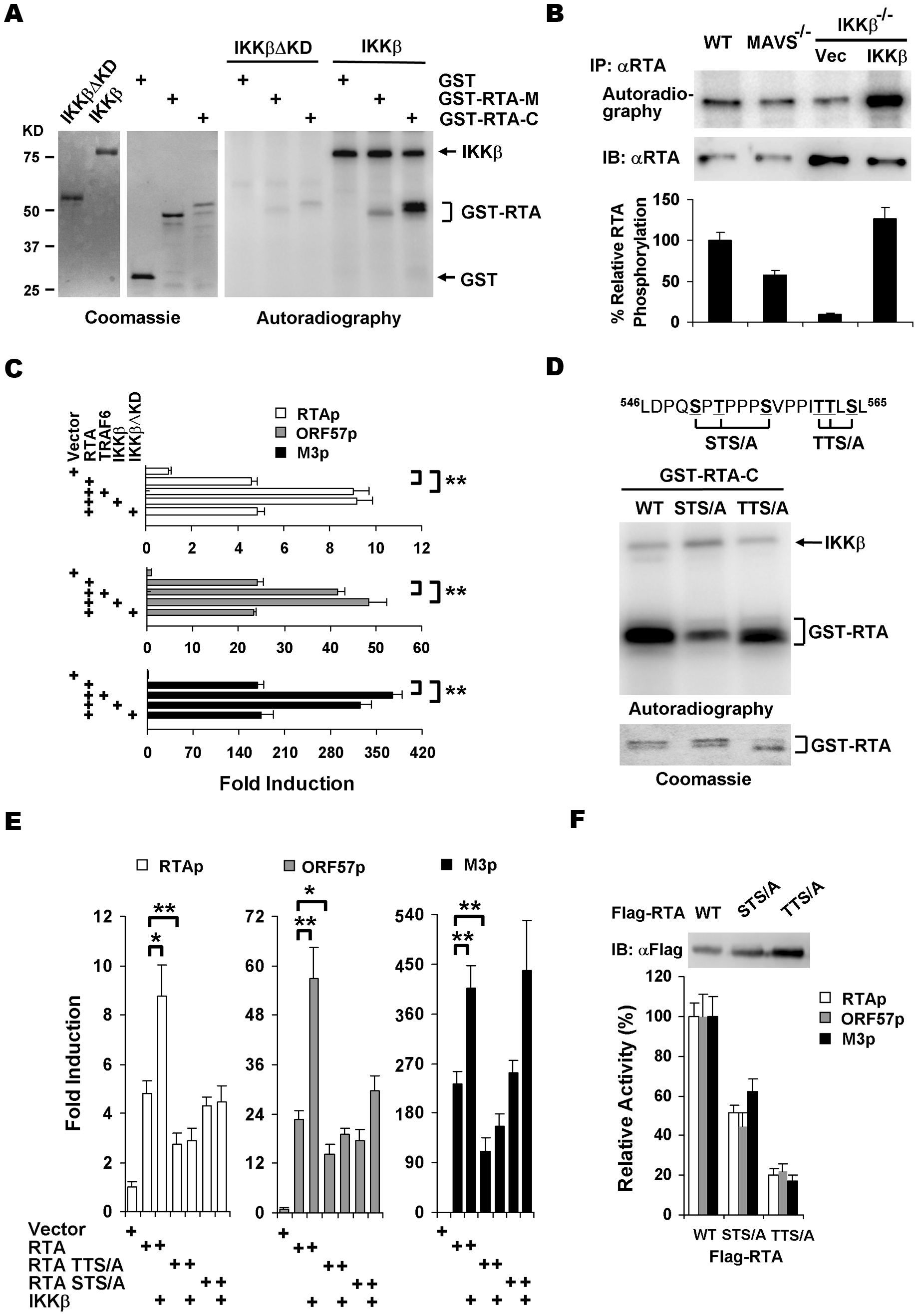 IKKβ phosphorylates and potentiates the transcription activity of γHV68 RTA.