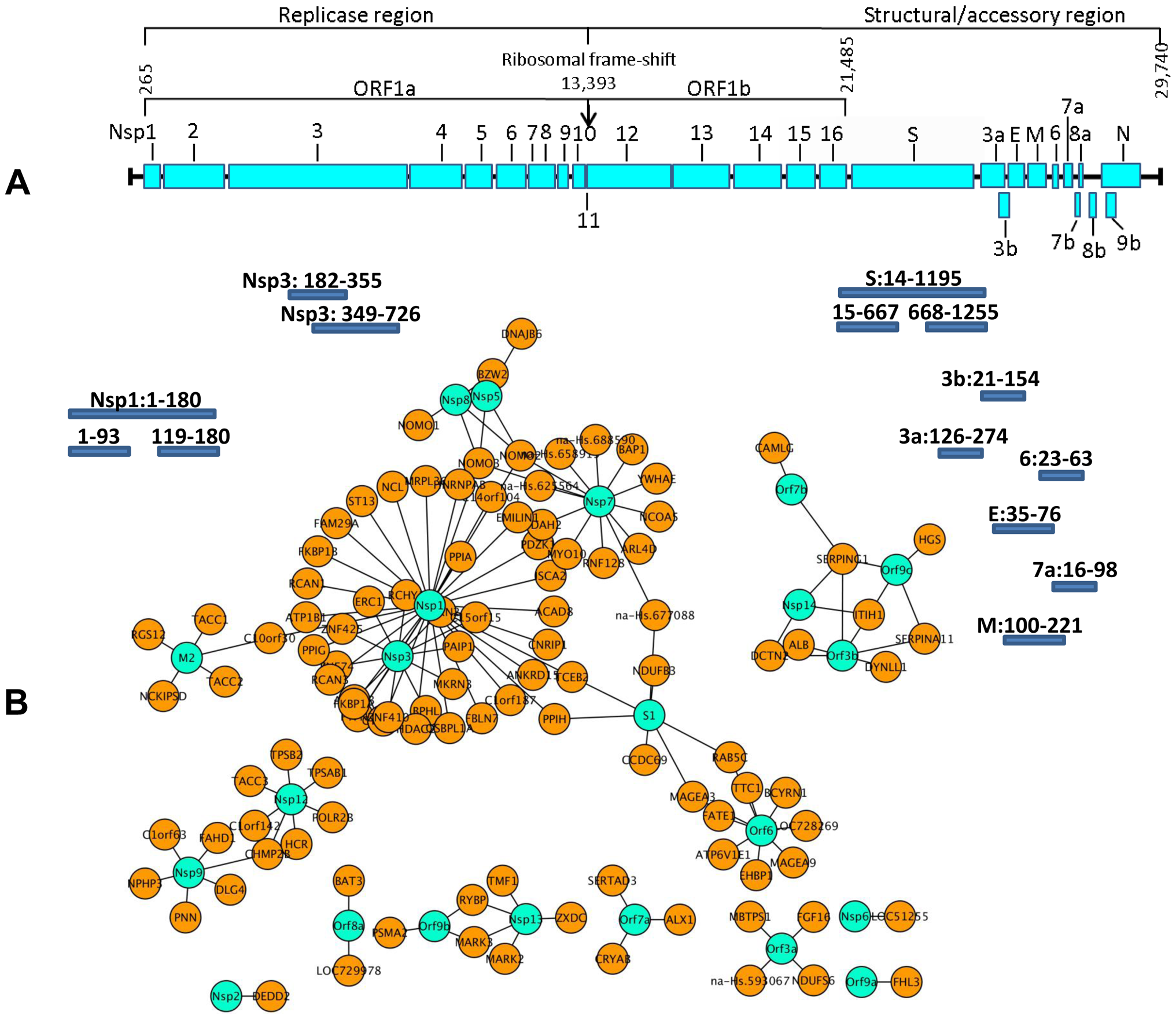 Localization of SARS-CoV ORFs and interaction network of virus host protein interactions.