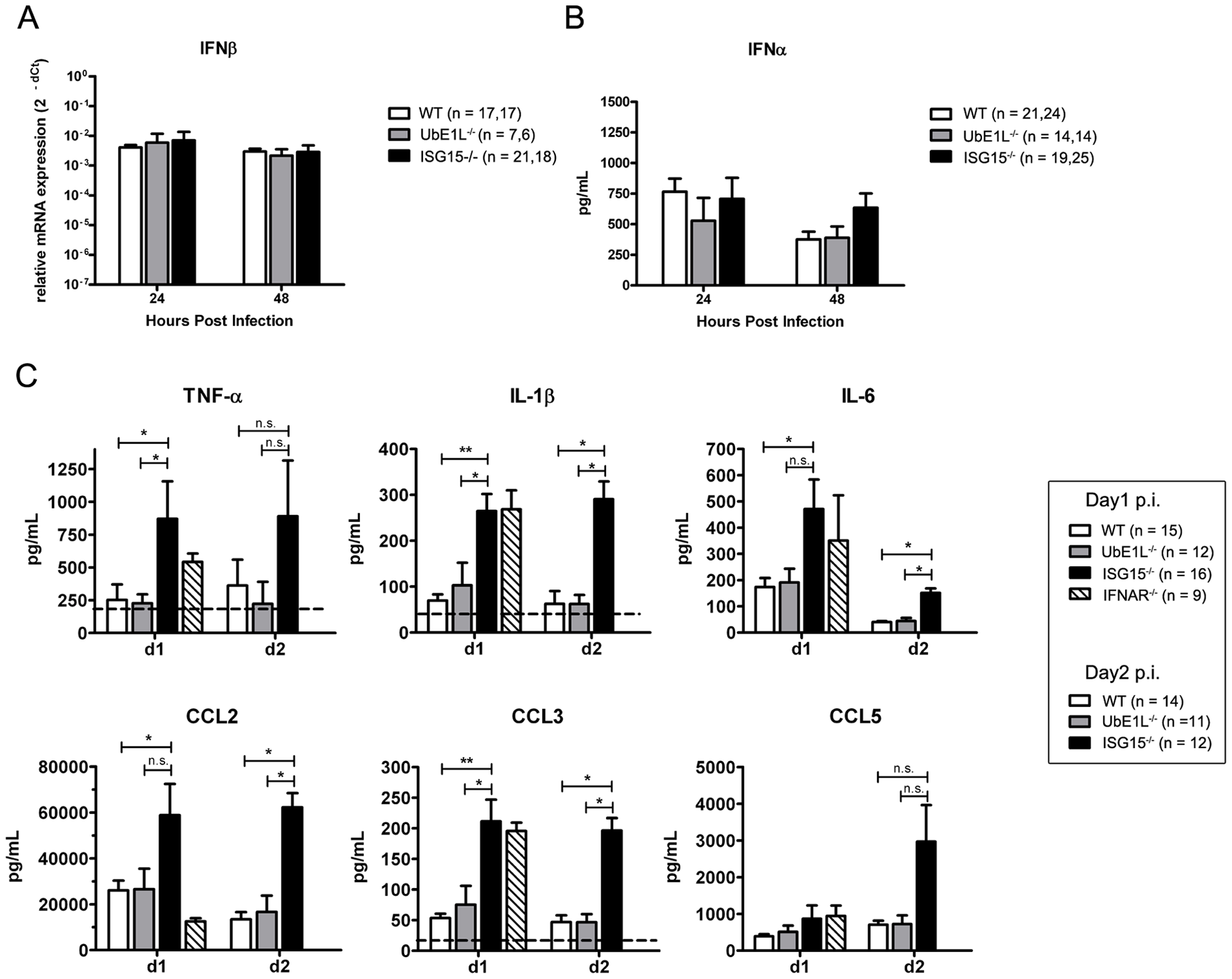 ISG15<sup>−/−</sup> neonates display elevated cytokine levels during CHIKV infection.