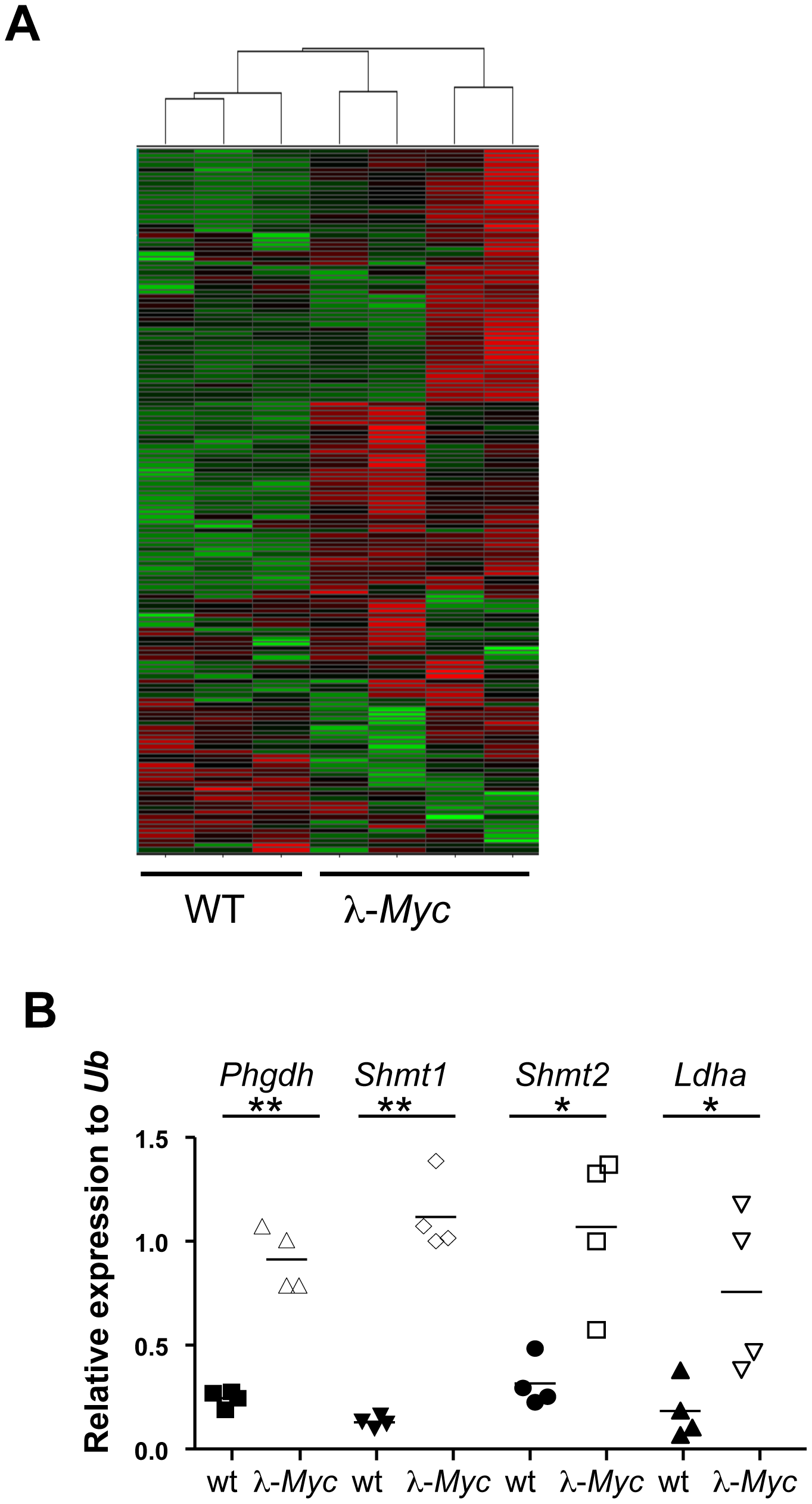 Myc regulates the metabolic transcriptome.