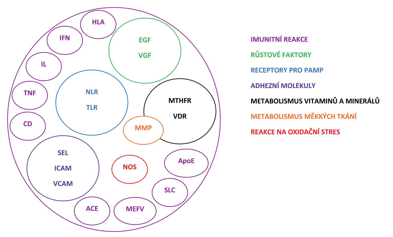 Přehled proteinů nebo skupin proteinů kódovaných geny, které jsou považovány za kandidátní pro recidivující aftózní stomatitidu (RAS) a jejichž variabilita byla již studována