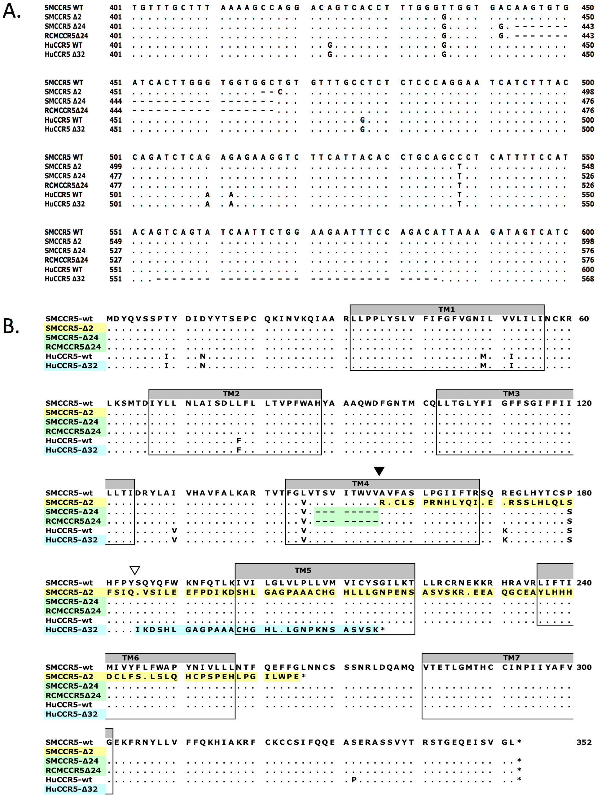 Sequence alignment of wild-type and mutant CCR5 genes.