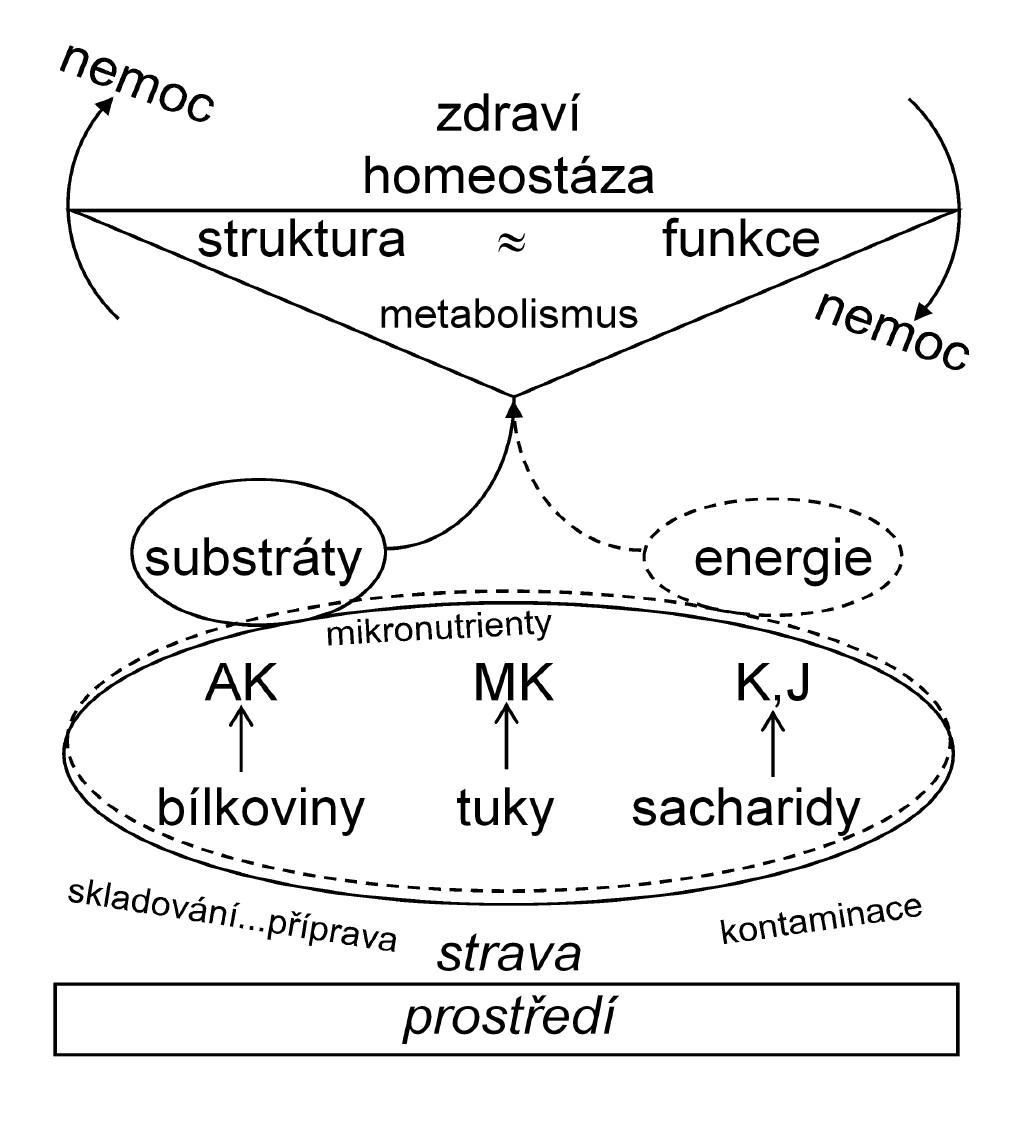 Obecný vztah mezi výživou a zdravím/nemocí.  AK – aminokyseliny,  MK – mastné kyseliny,  K –komplexní sacharidy,  J – jednoduché sacharidy. Hlavní živiny – bílkoviny, tuky a sacharidy a mikronutrienty poskytují substrát a energii pro metabolismus. Za biologicky normálních podmínek existuje rovnováha mezi strukturou a funkcí (homeostaze). Výchylky v této rovnováze, které jsou vyvolány absolutními či relativními změnami v množství a poměrech, ale i kvalitě složek stravy, mohou vést k zhoršení či poruše metabolismu a nemoci