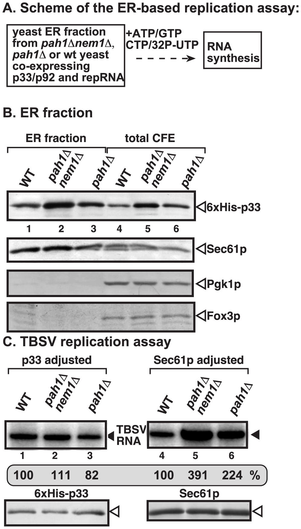 Enhanced TBSV repRNA replication in isolated ER preparations from <i>pah1Δ</i> and <i>pah1Δ nem1Δ</i> yeasts.