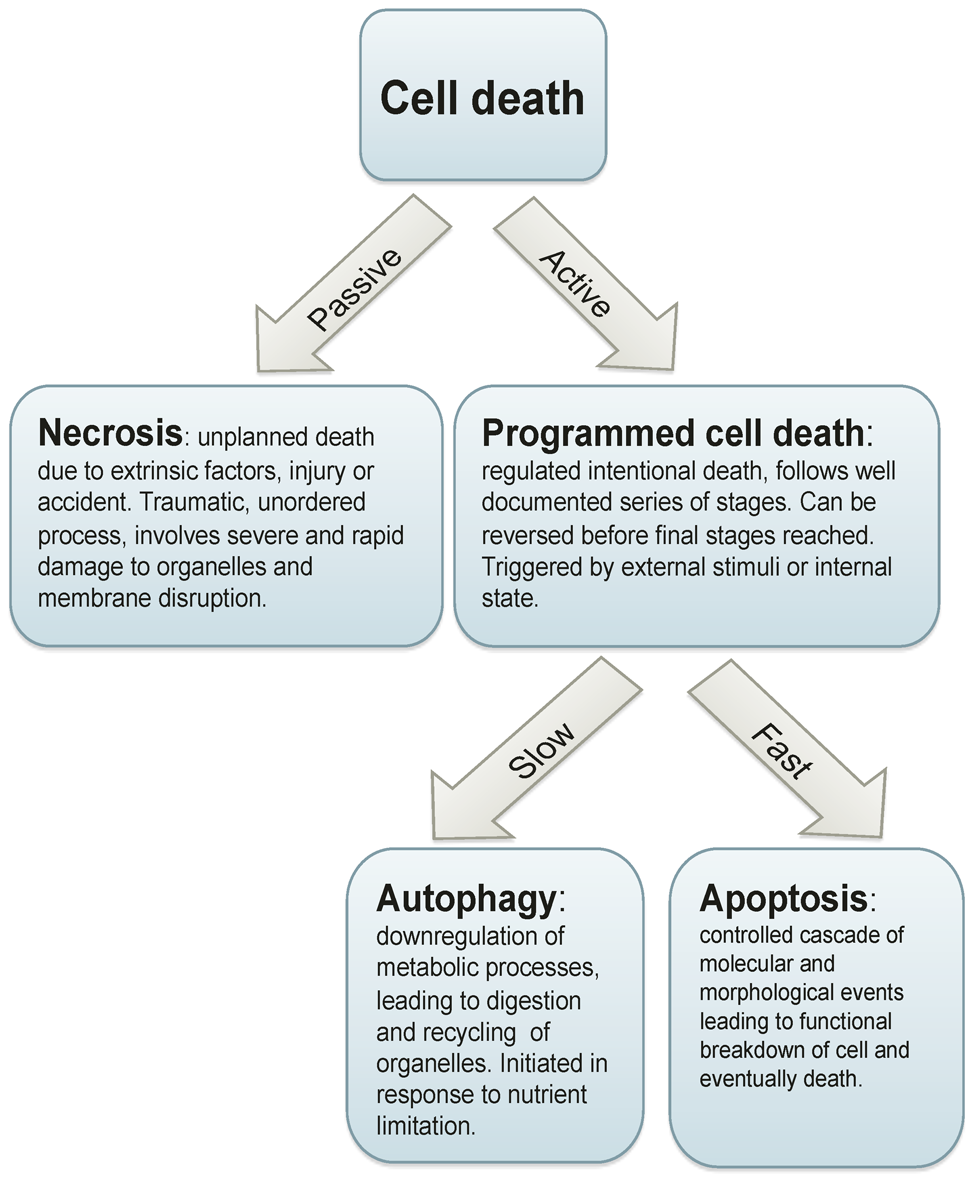 Cell death processes.