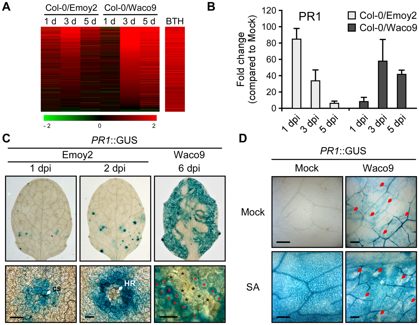 <i>Hpa</i> suppresses <i>PR1</i> expression induced by SA in infected cells.