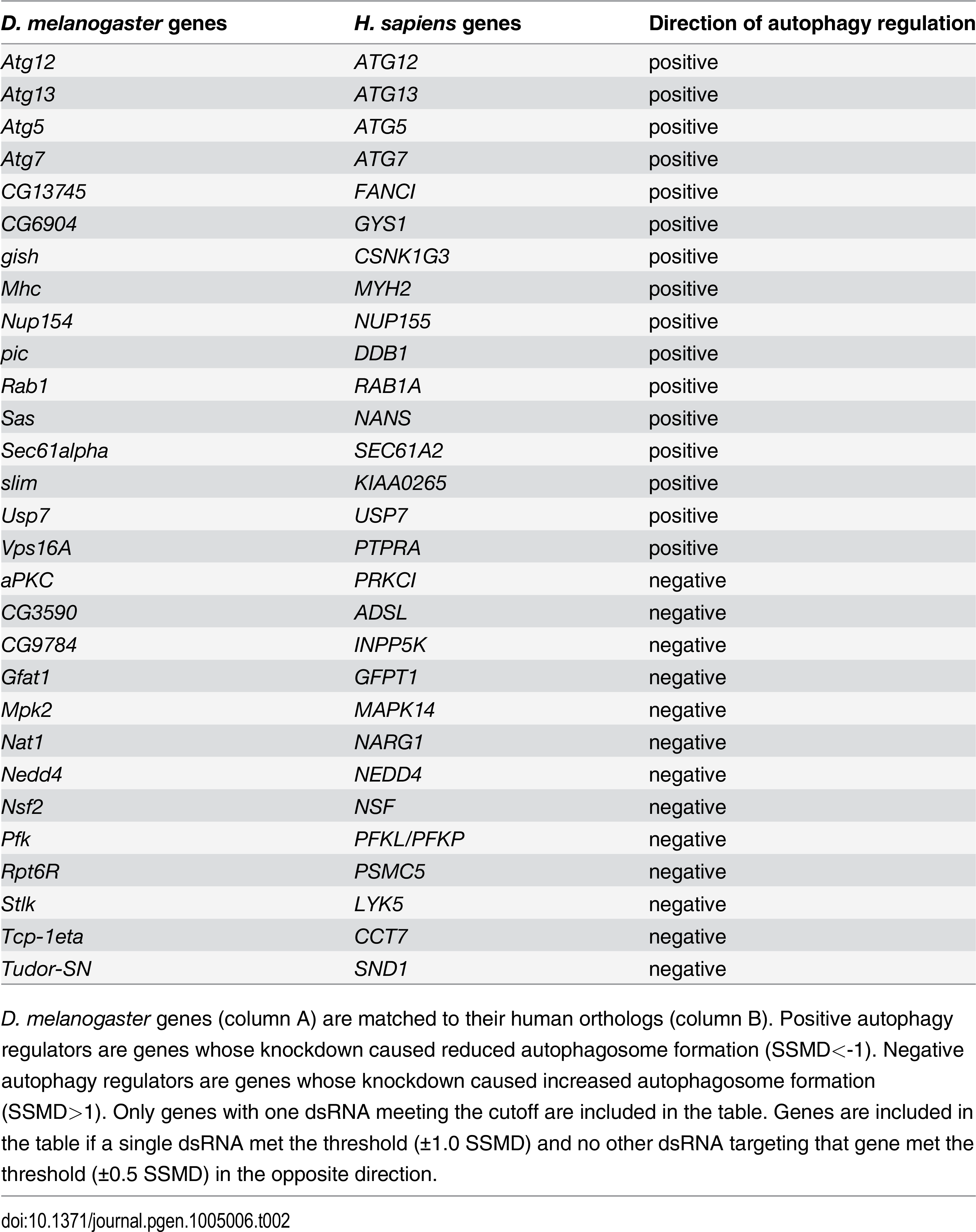 List of genes with one dsRNA scoring in primary culture screen.