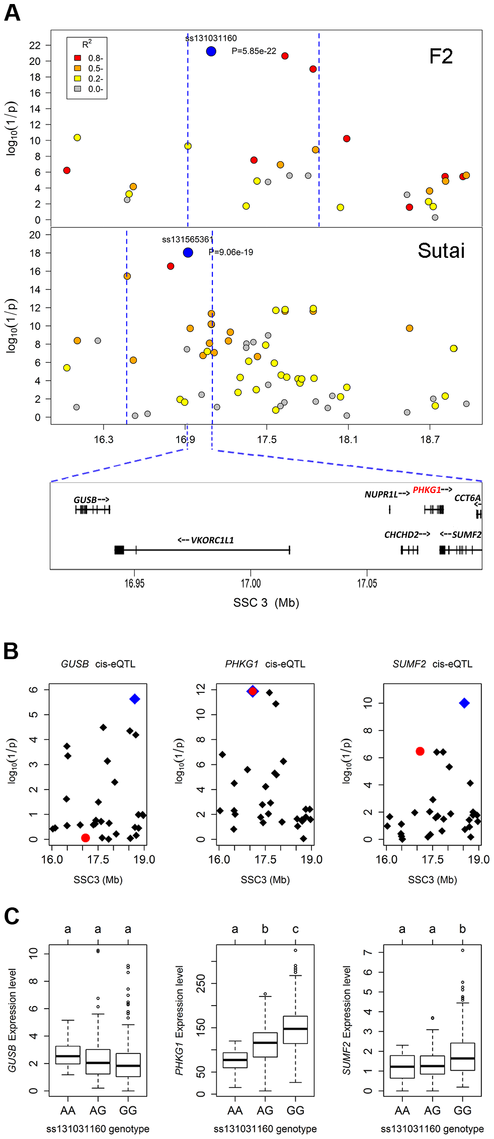 Prioritizing candidate genes by the colocalization between pQTL and eQTL.