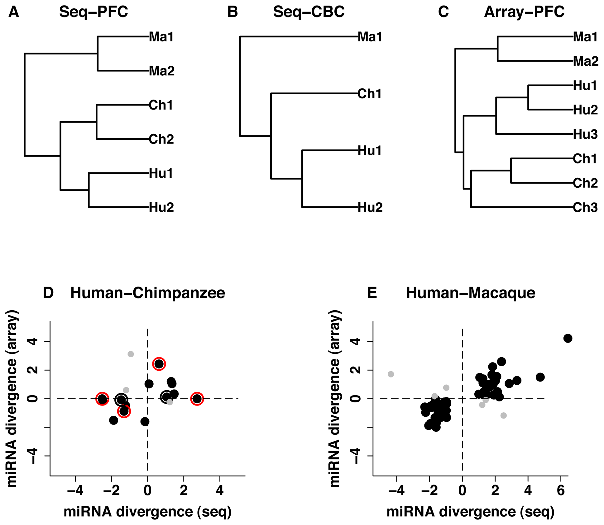 miRNA expression divergence among species and between two brain regions.