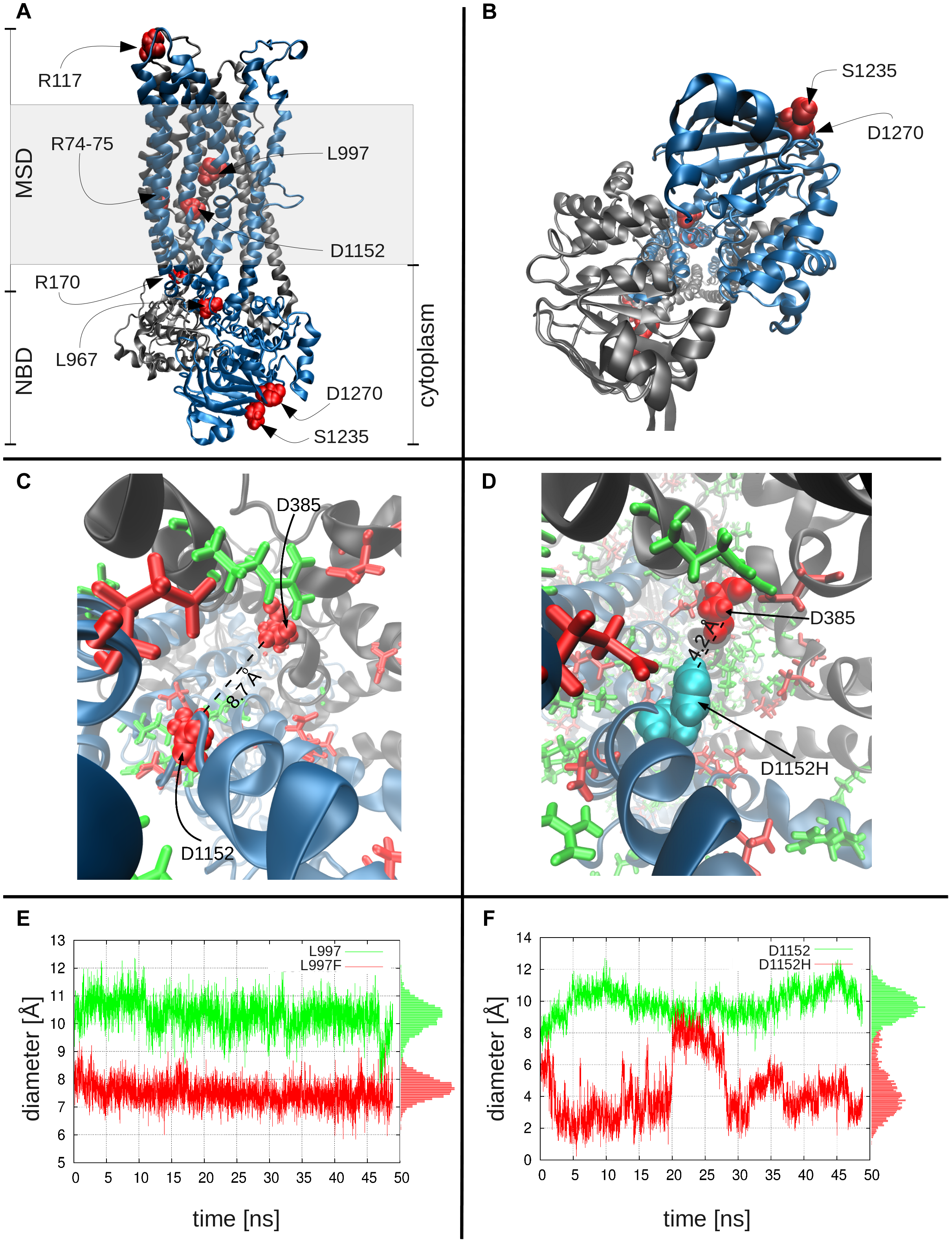 Molecular modeling and simulations of CFTR WT and variants.