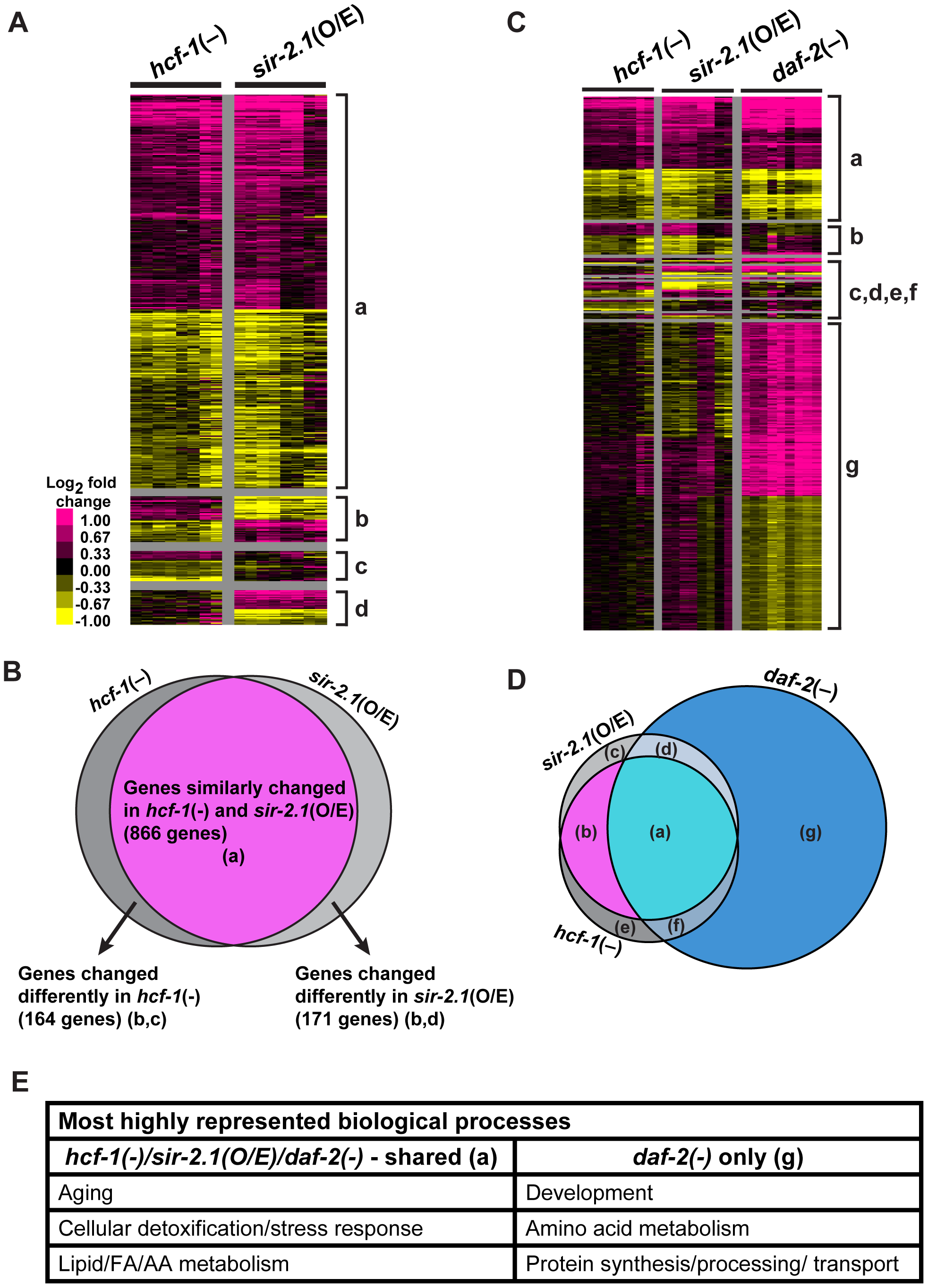 <i>hcf-1</i> inactivation and <i>sir-2.1</i> overexpression similarly affect a specific subset of <i>daf-16</i> downstream target genes.