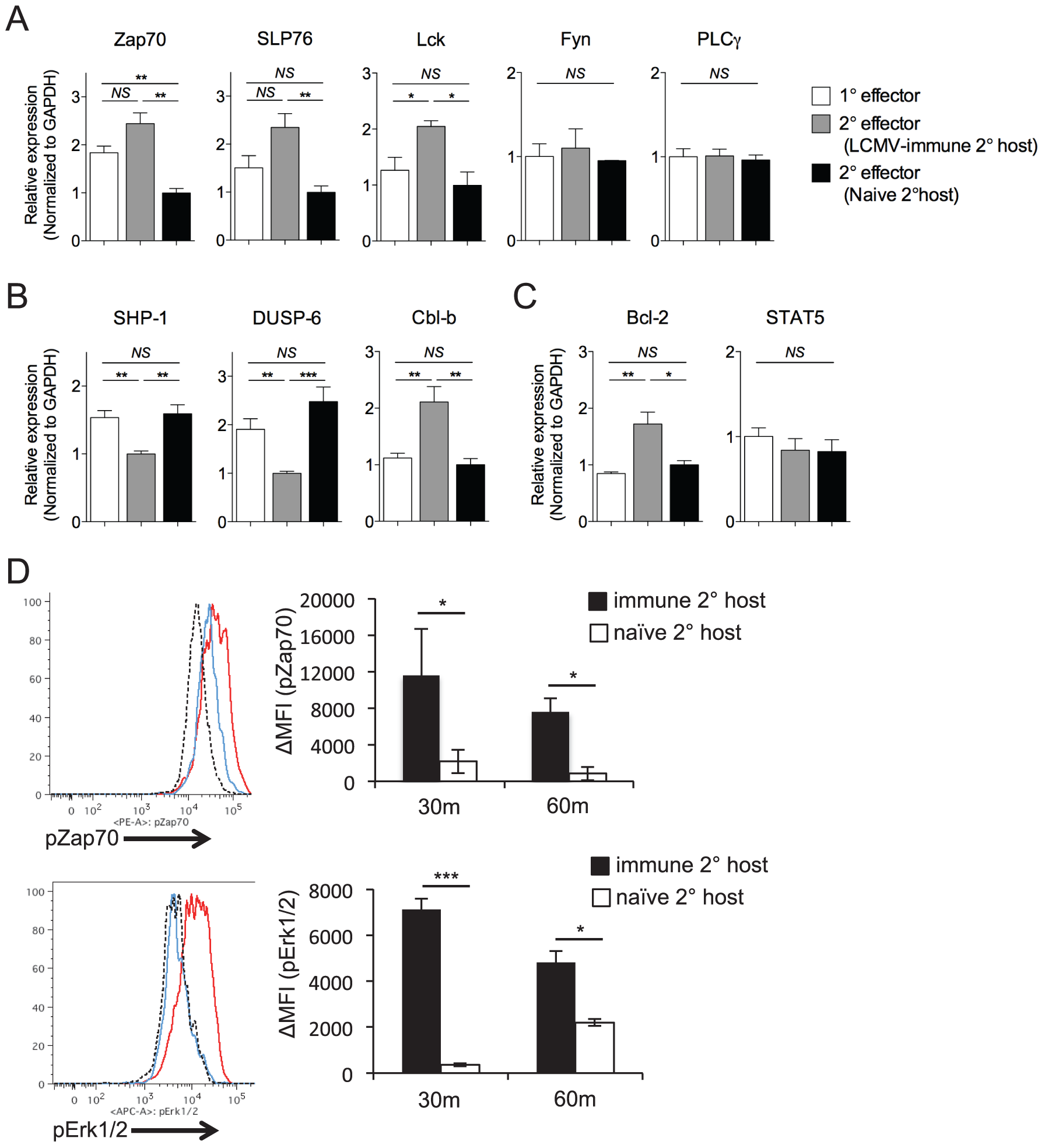 Maintenance of high functional avidity after secondary challenge is associated with enhanced expression of TCR signaling molecules.