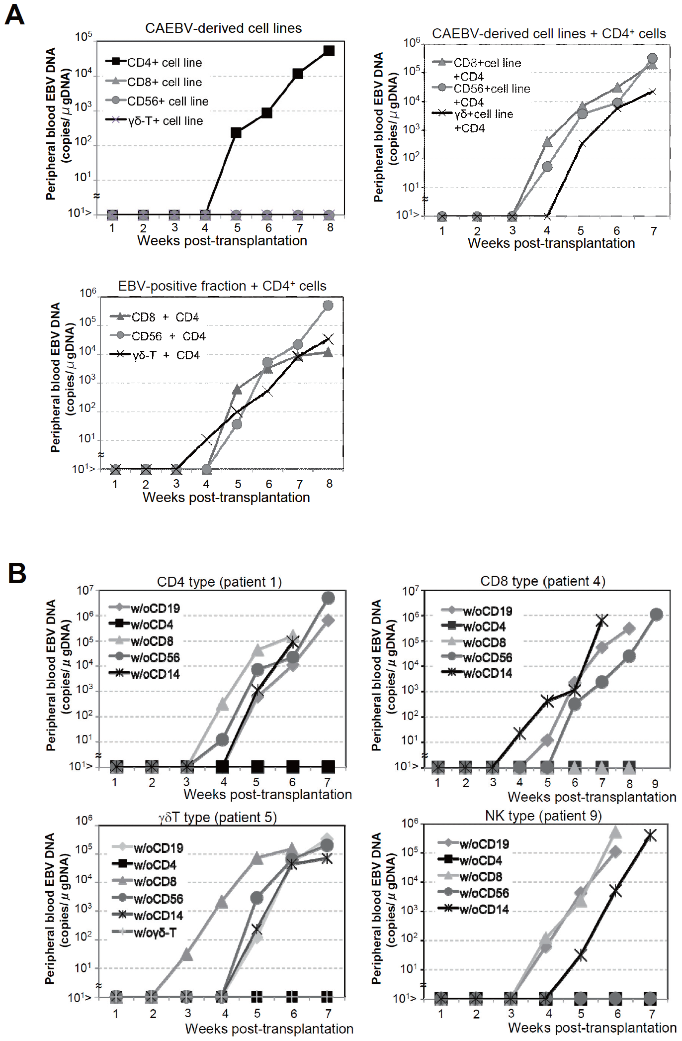 Analysis on the conditions of the engraftment of EBV-infected T and NK cells in NOG mice.