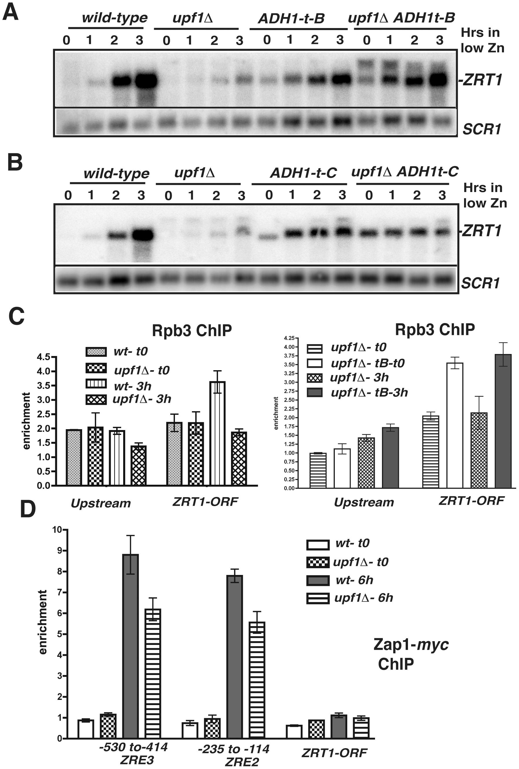 Effects of transcription terminators upstream <i>ZRT1</i> on <i>ZRT1</i> induction and analysis of RNA Polymerase II and Zap1p occupancies by ChIP.