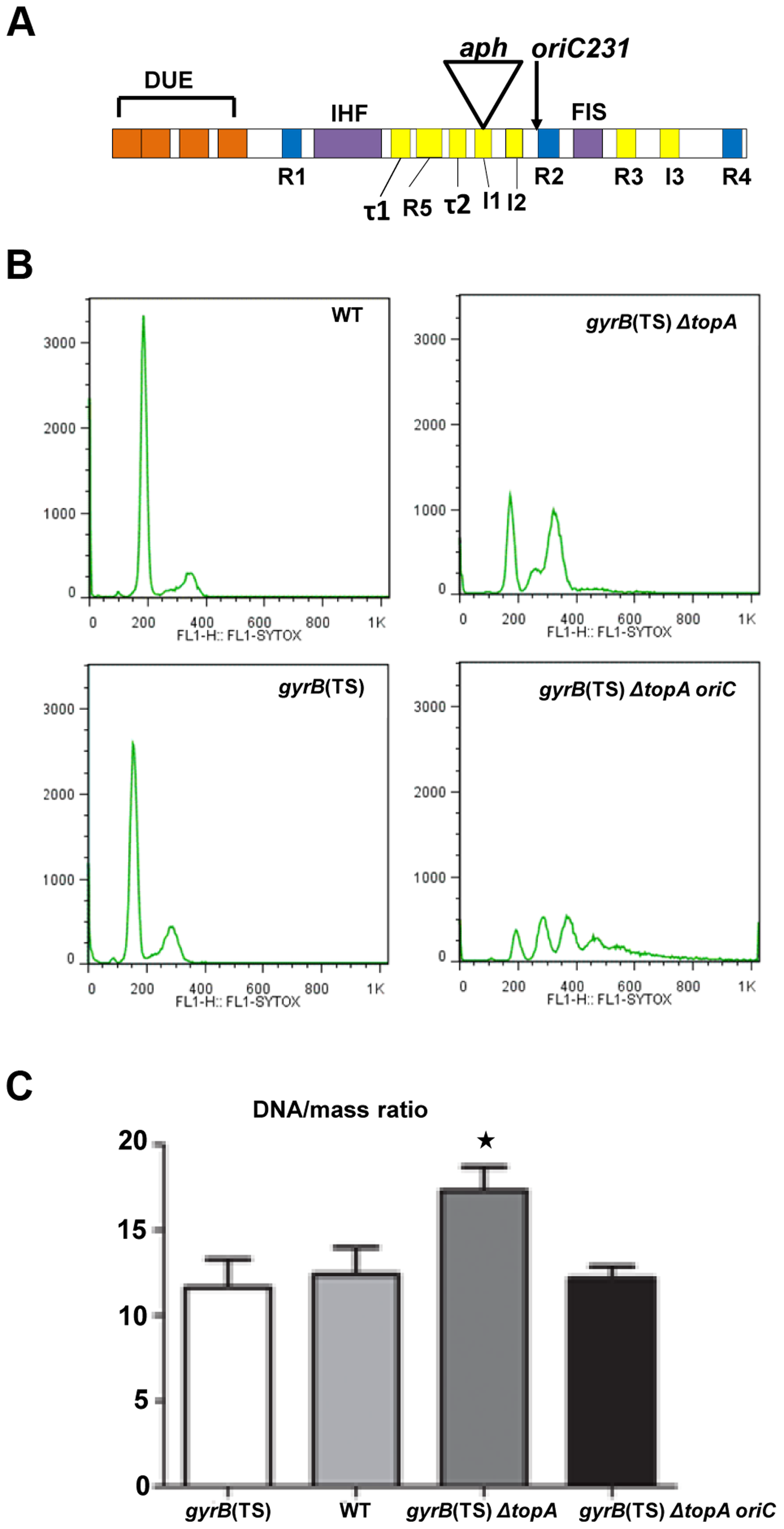 Replication initiation asynchrony and reduced DNA/mass ratio conferred by the <i>oriC15</i>::<i>aph</i> suppressor mutation.