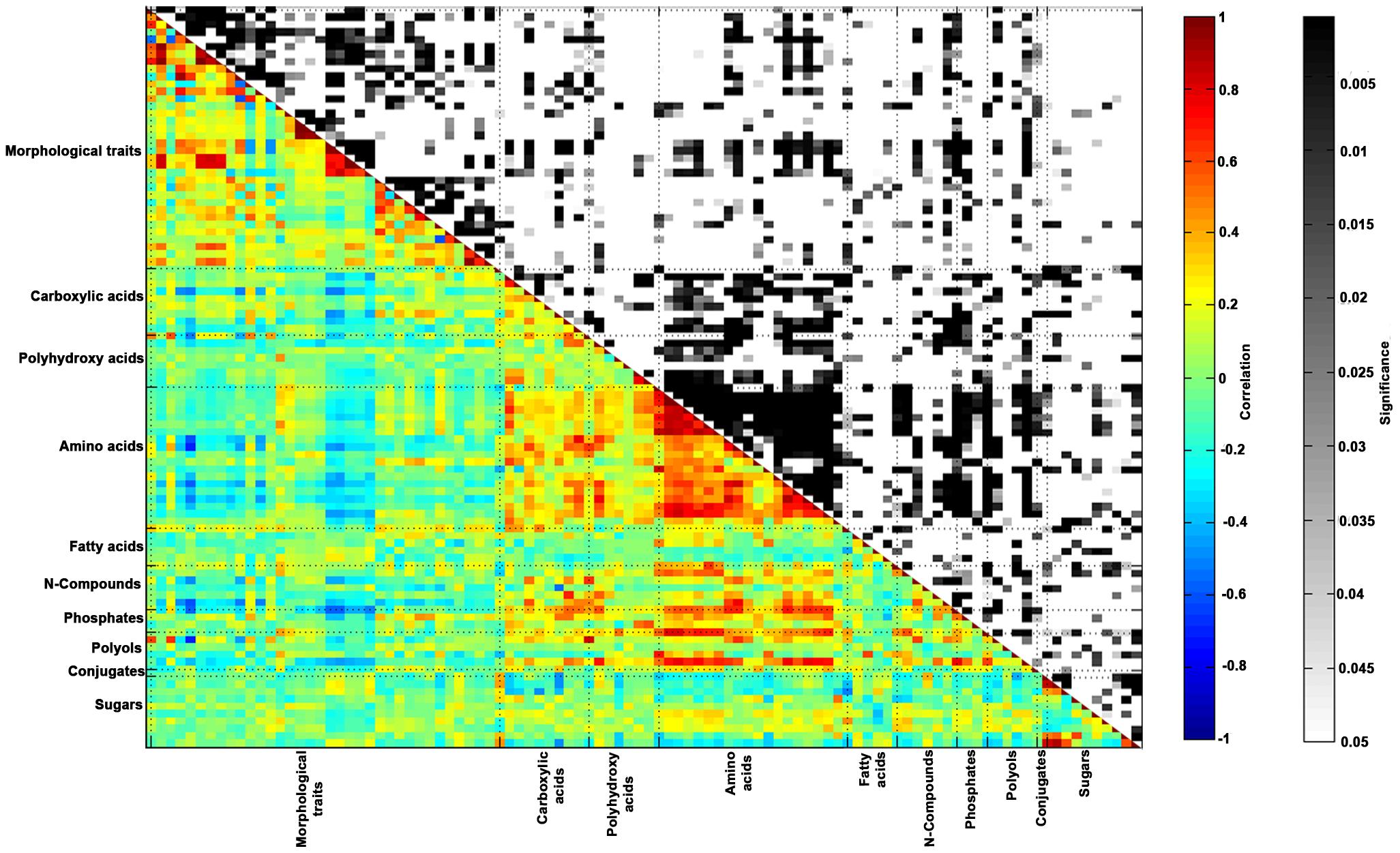 Morphological traits—metabolite correlation/significance.