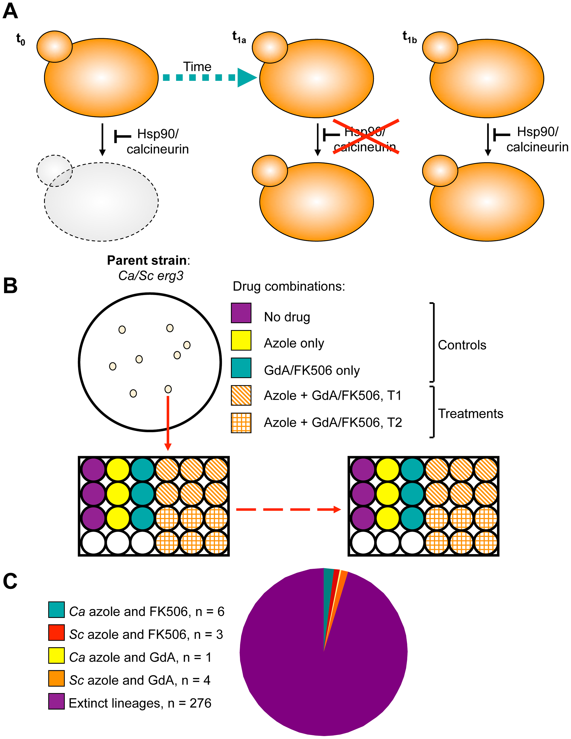 Design and outcome of the experimental evolution of resistance to drug combinations.