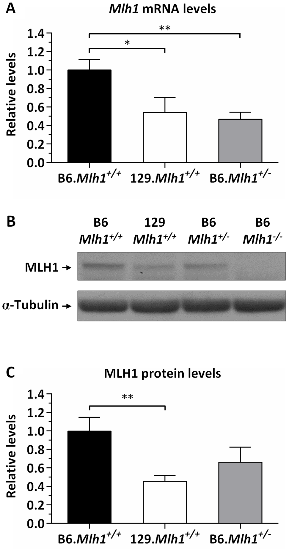 Reduced MLH1 expression in 129 versus B6 mice.
