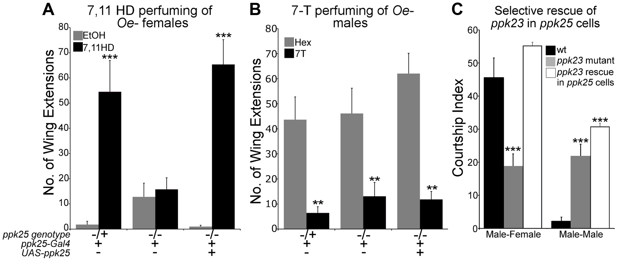 <i>ppk25</i> is required for courtship stimulation by 7,11HD but not for inhibition of courtship by 7-T.