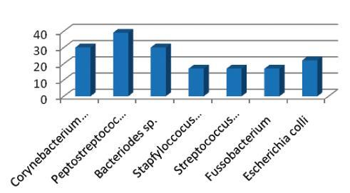 Četnost výskytu mikrobiálního agens v pilonidálním sinu Graph 4. Incidence of microbial agens in pilonidal sinus