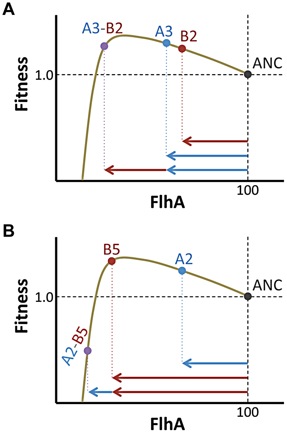 Phenotype and not just fitness value determines epistatic interactions.