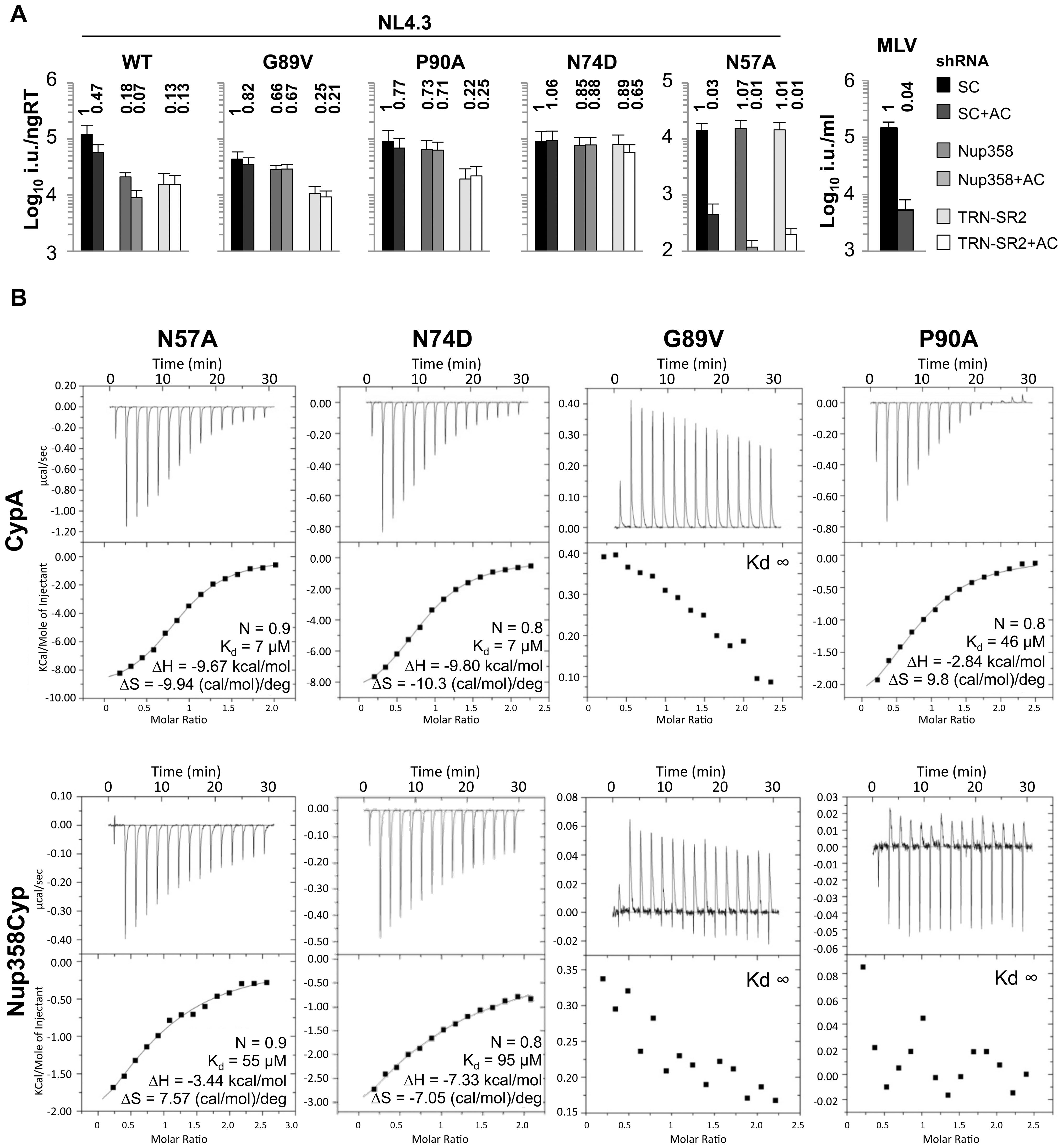 Effect of CA mutants on Nup358/TRN-SR2 RNAi sensitivity and Nup358Cyp binding.