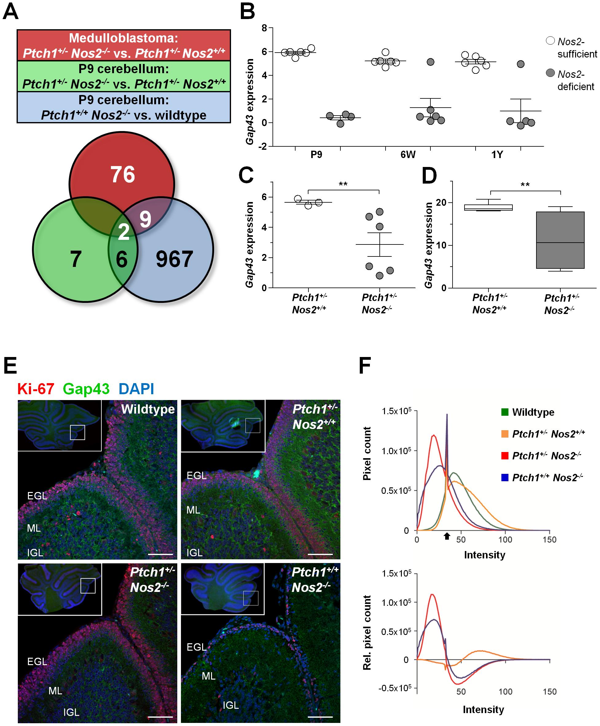 Identification of <i>Nos2</i>-regulated candidate genes.