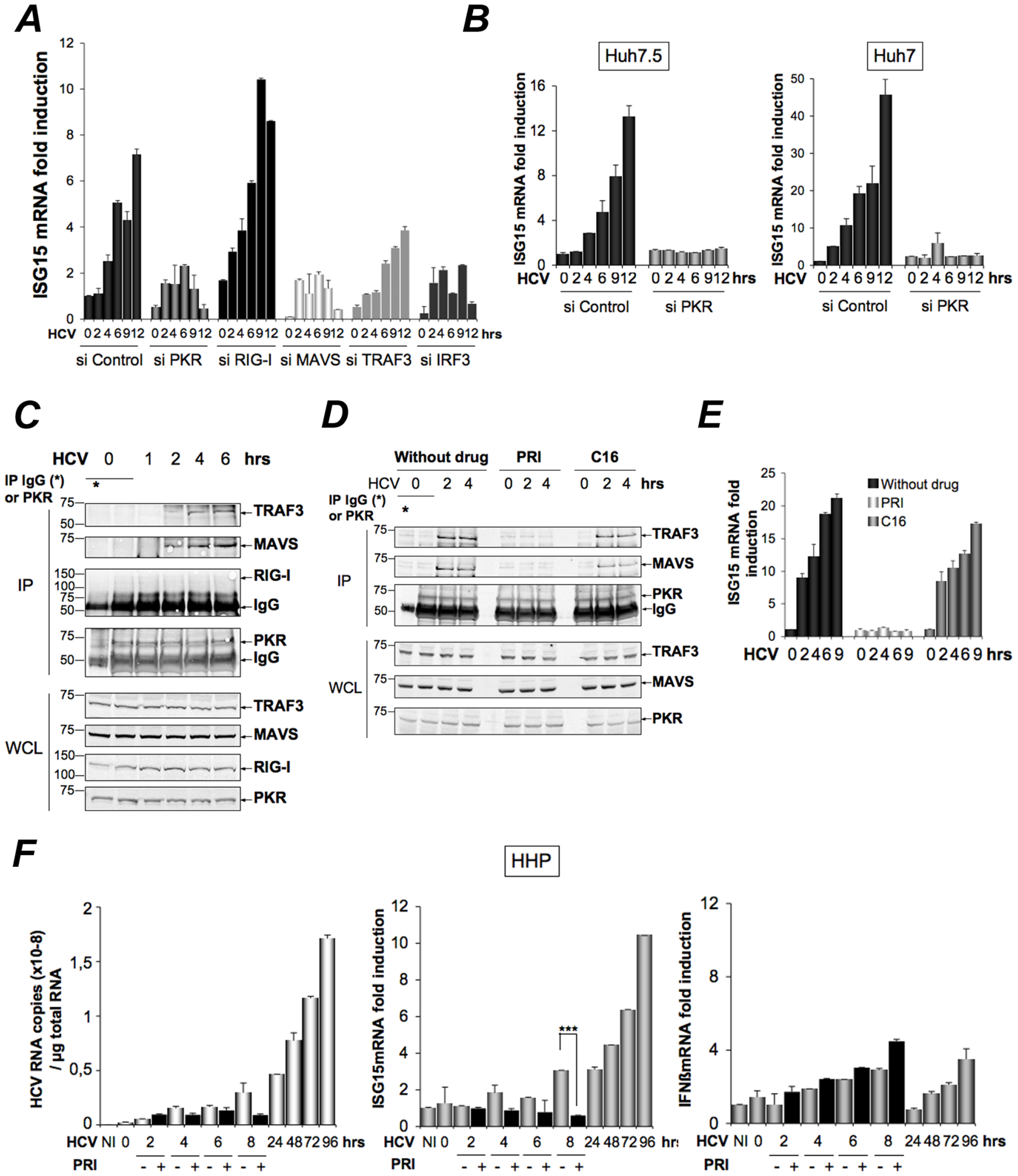HCV-dependent induction of ISG15 involves PKR, MAVS and TRAF3 and not RIG-I.