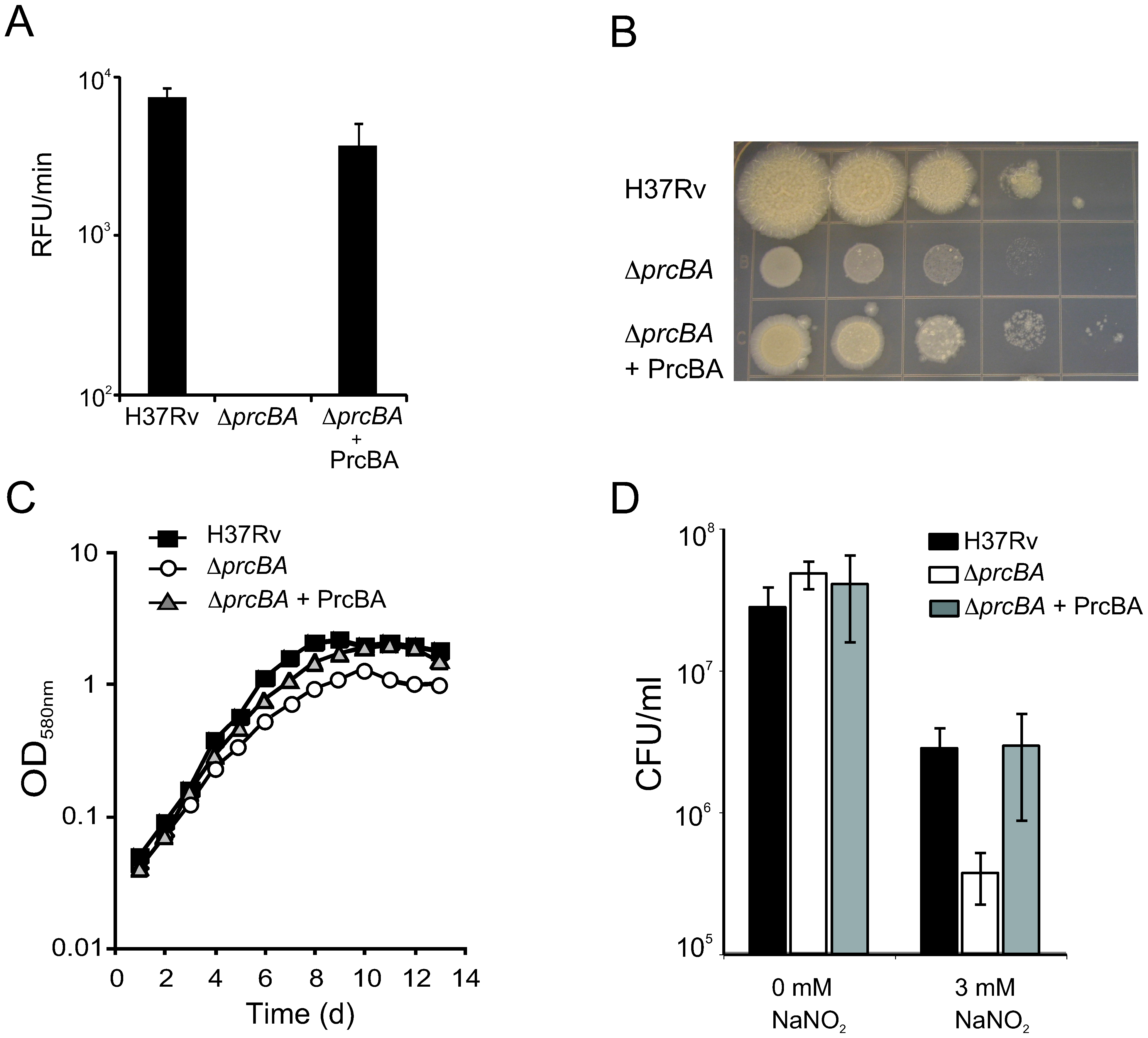 The proteasome is required for optimal growth <i>in vitro</i> and for resistance to RNI.
