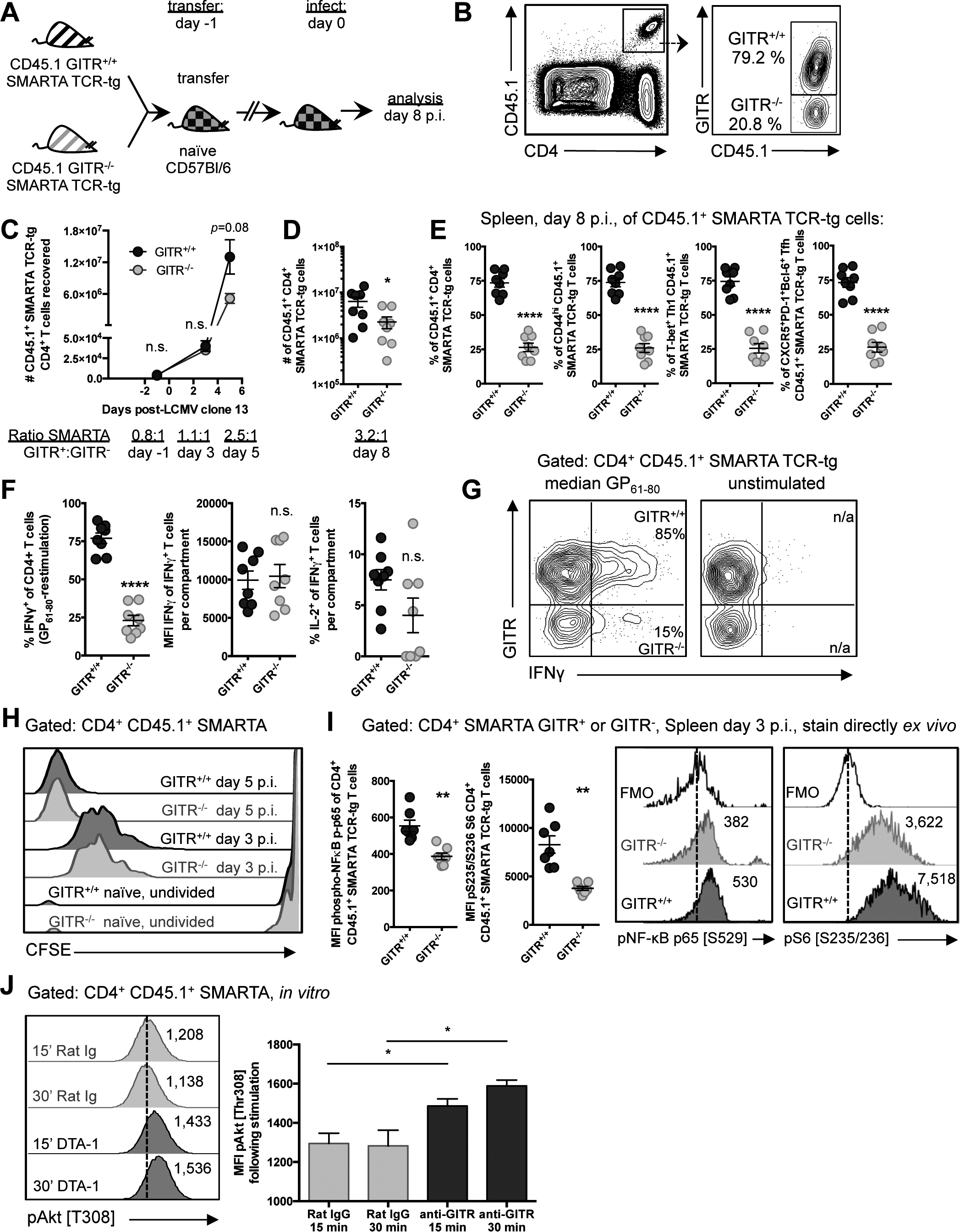 GITR co-stimulation activates classical NF-κB and the Akt-mTORC1 signaling axis to regulate CD4 T cell accumulation post-priming.