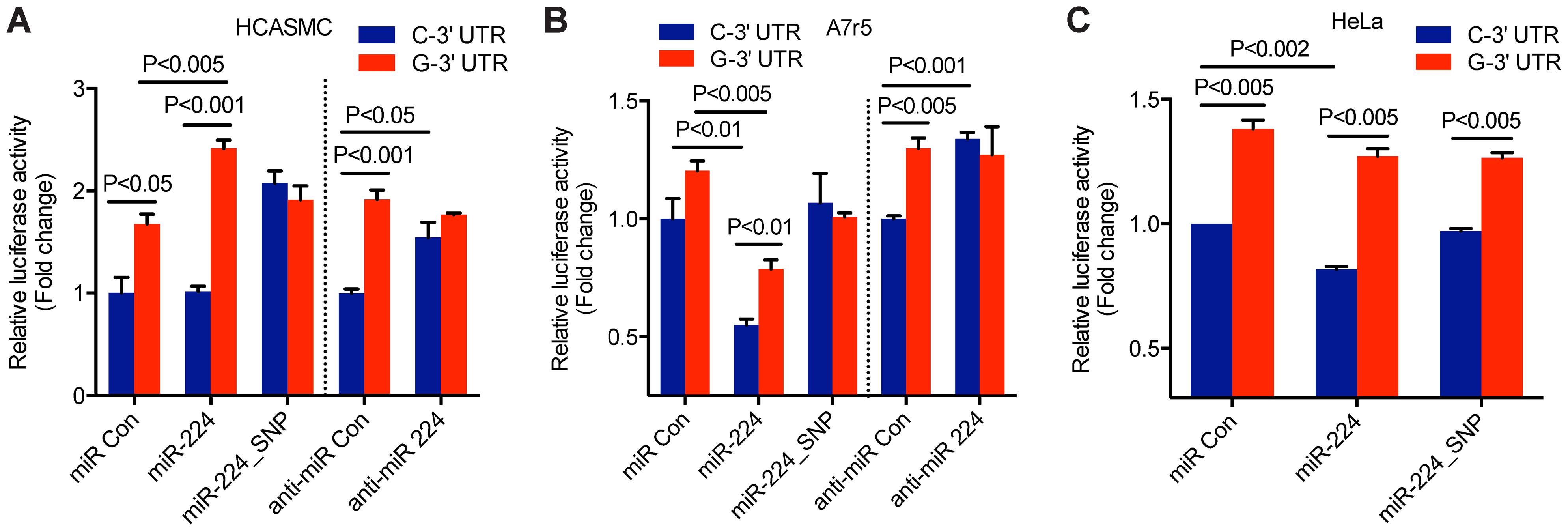 Allele-specific miR-224 regulation of <i>TCF21</i> 3′UTR at rs12190287.