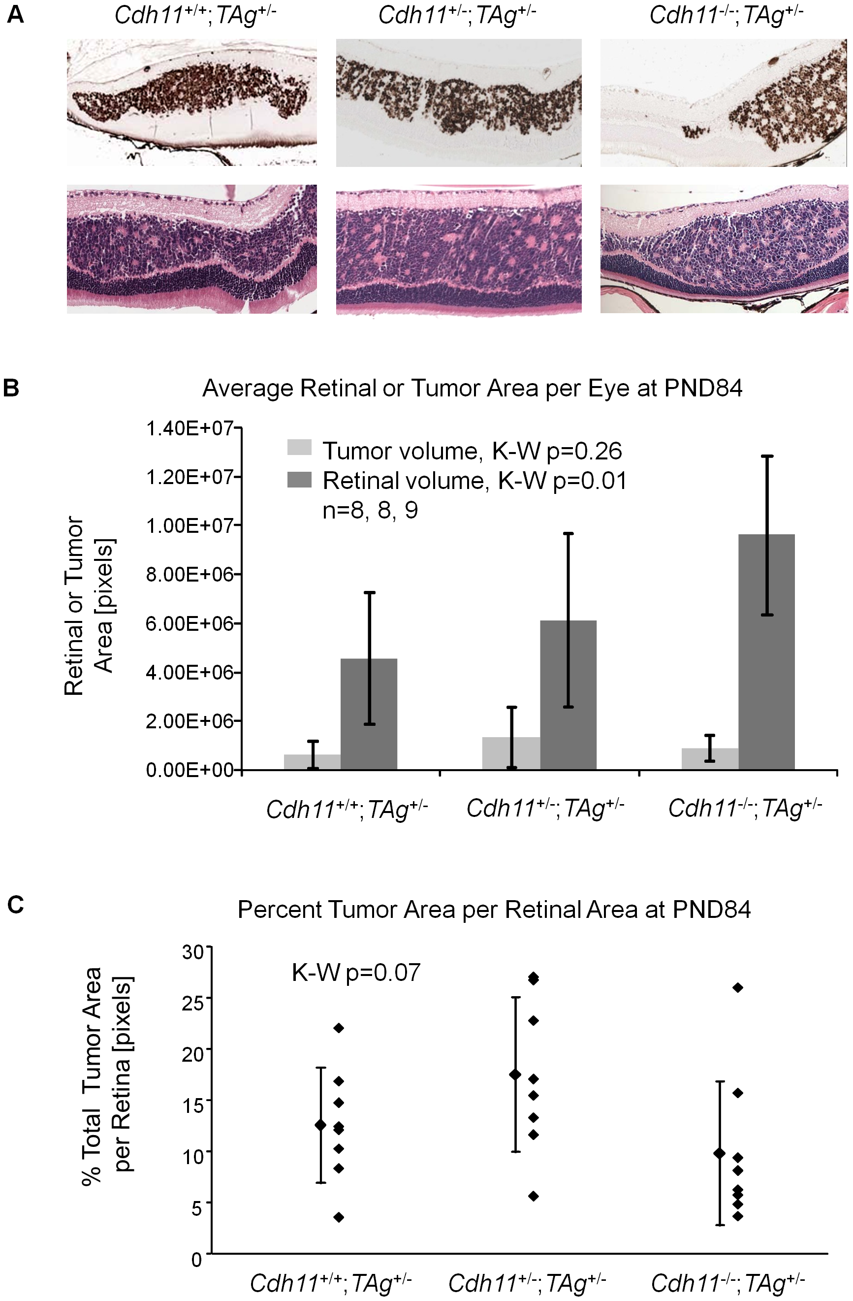 At PND84, total tumor volume was similar in all three genotypes.