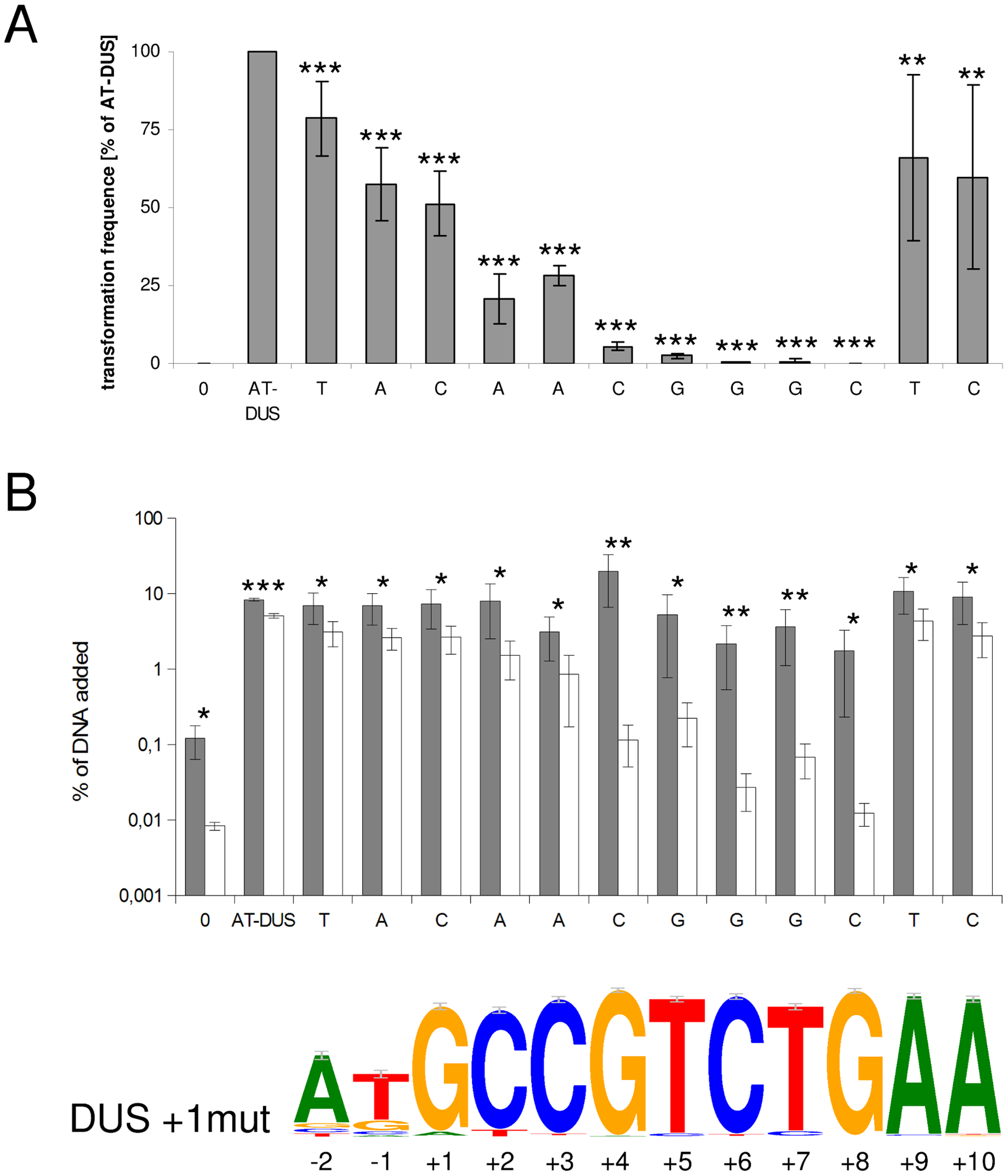 Effects of point mutations in the DUS on quantitative transformation and DNA binding and uptake of <i>N. meningitidis</i> MC58.