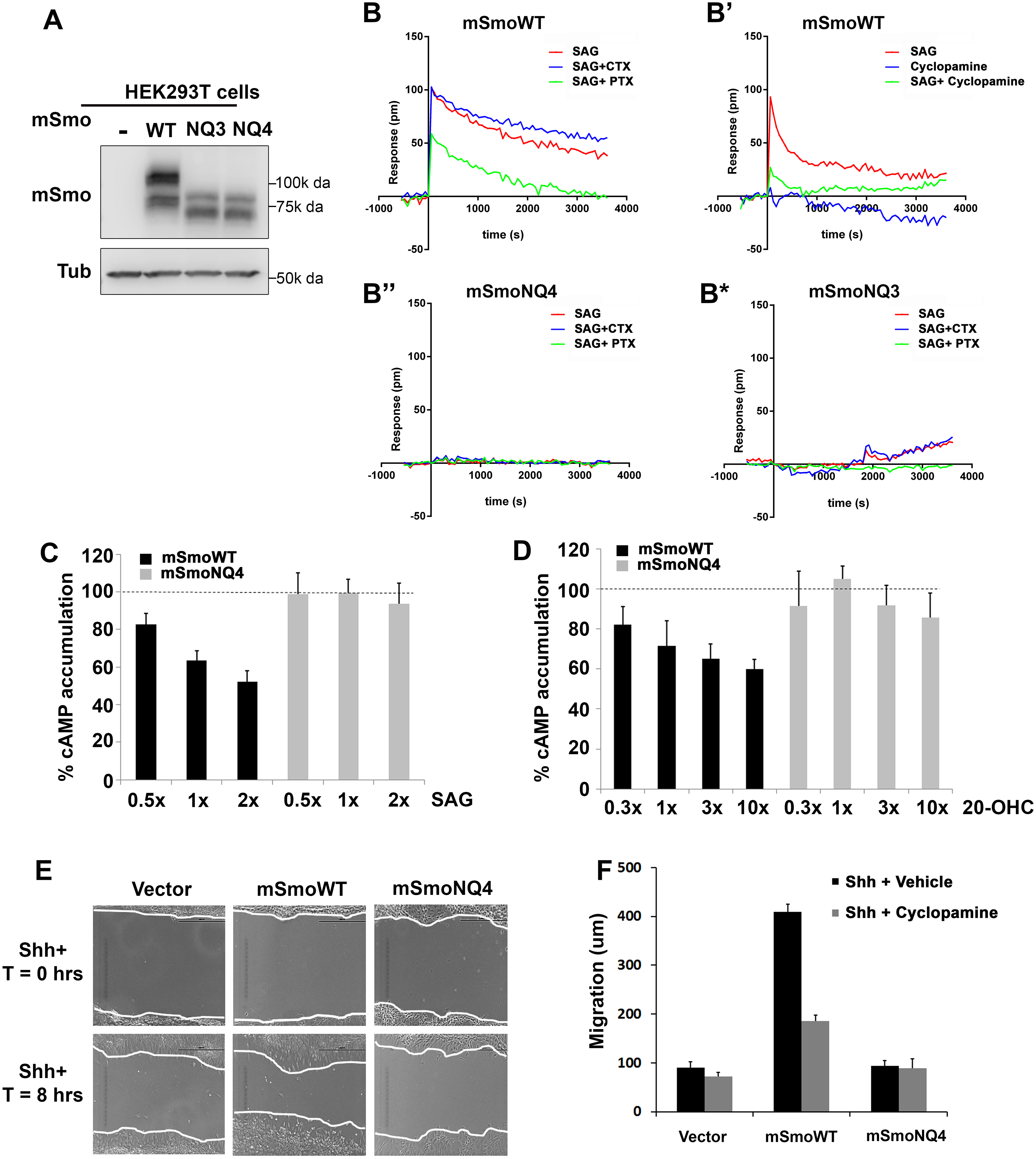 Glycosylation is required for non-canonical mSmo signaling.