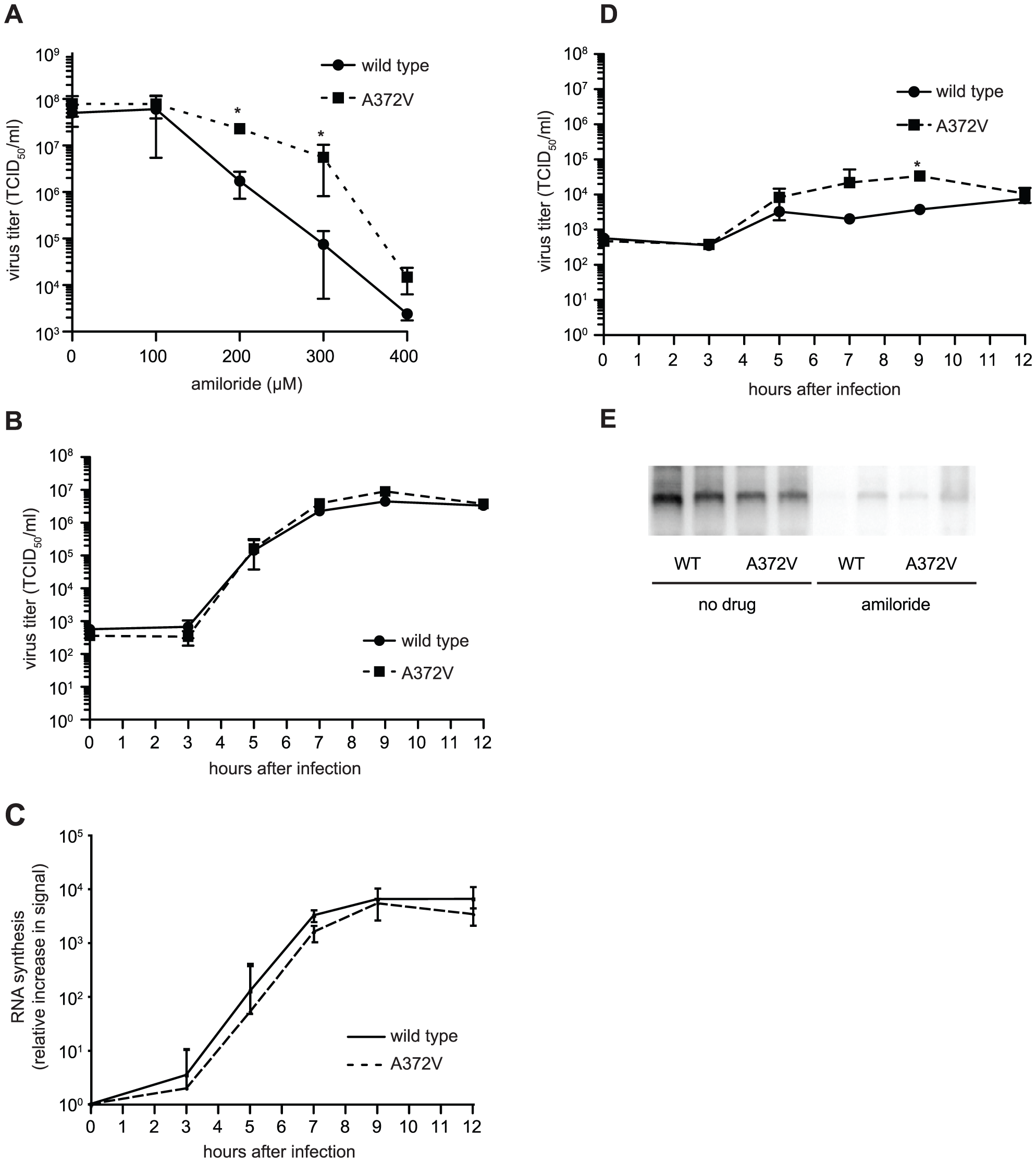 A372V resistance to amiloride does not involve improved replication.