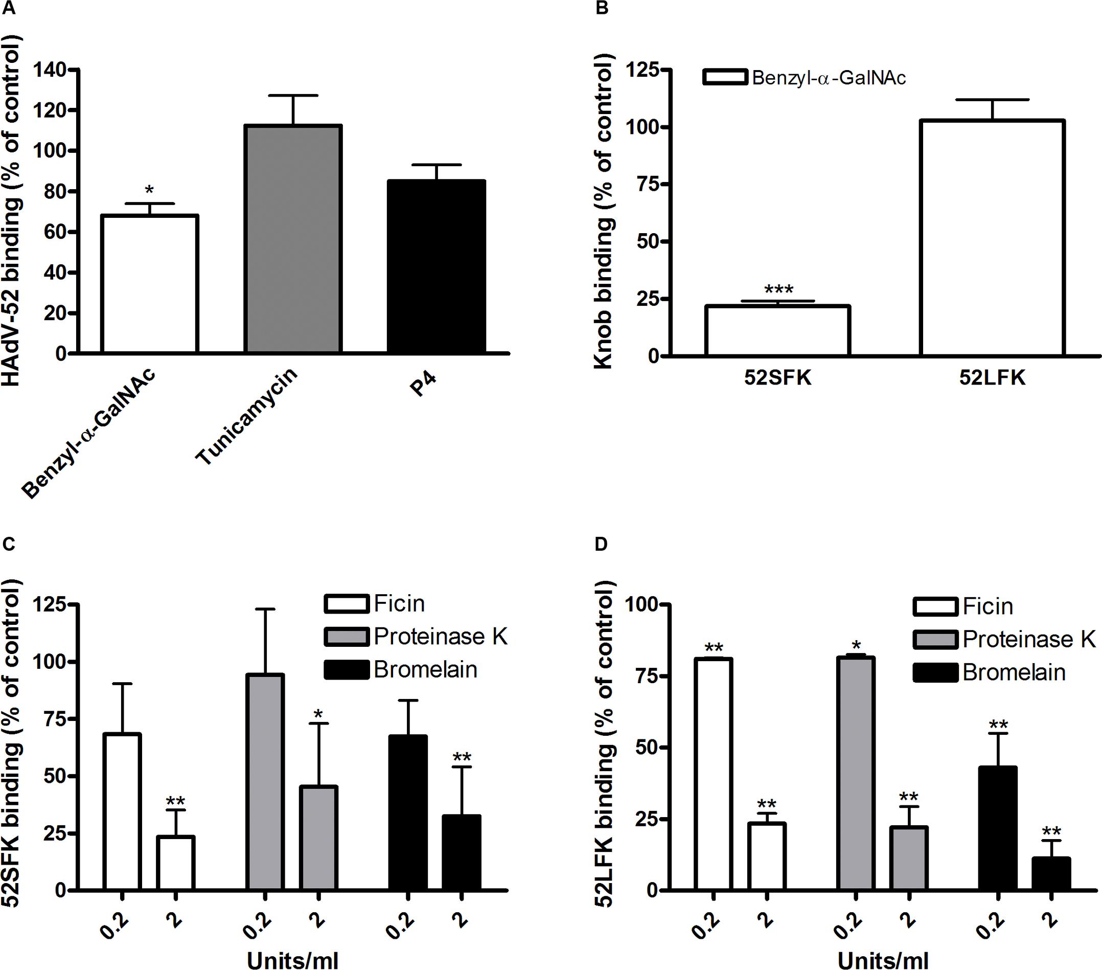 HAdV-52 short fiber knob binds to <i>O</i>-linked glycoproteins on A549 cells.