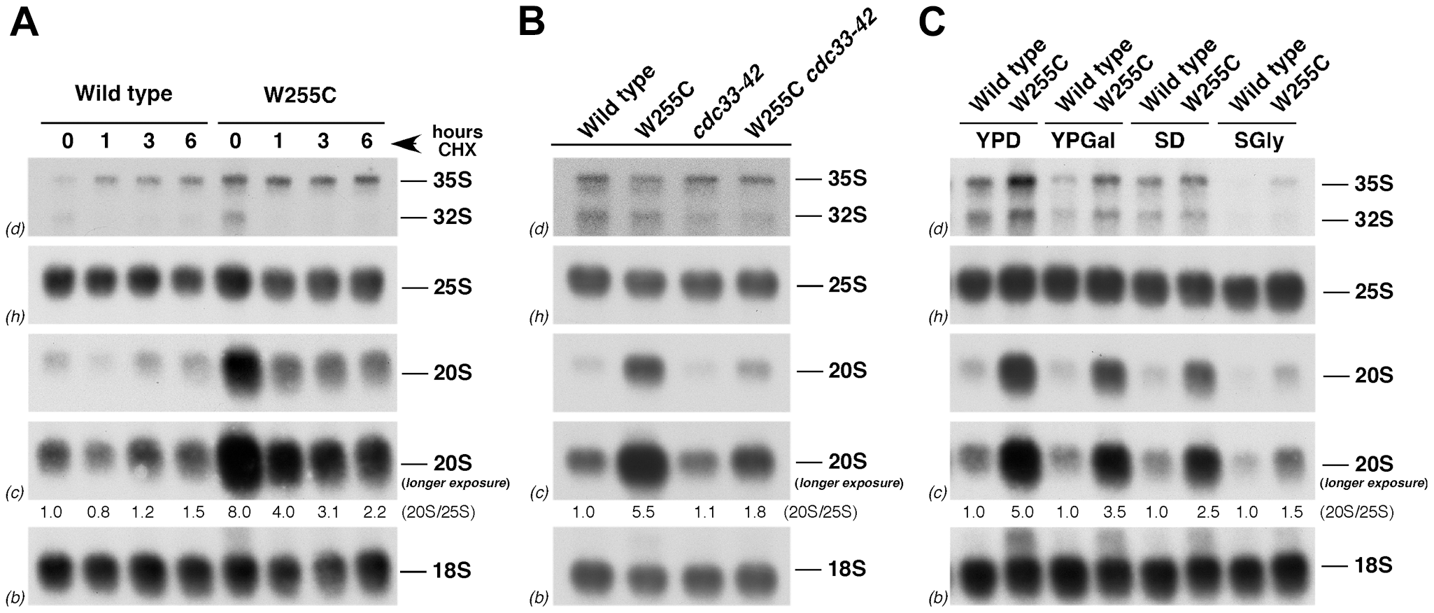 Translation rate modulates the levels of 20S pre-rRNA in <i>rpl3</i>[W255C] cells.