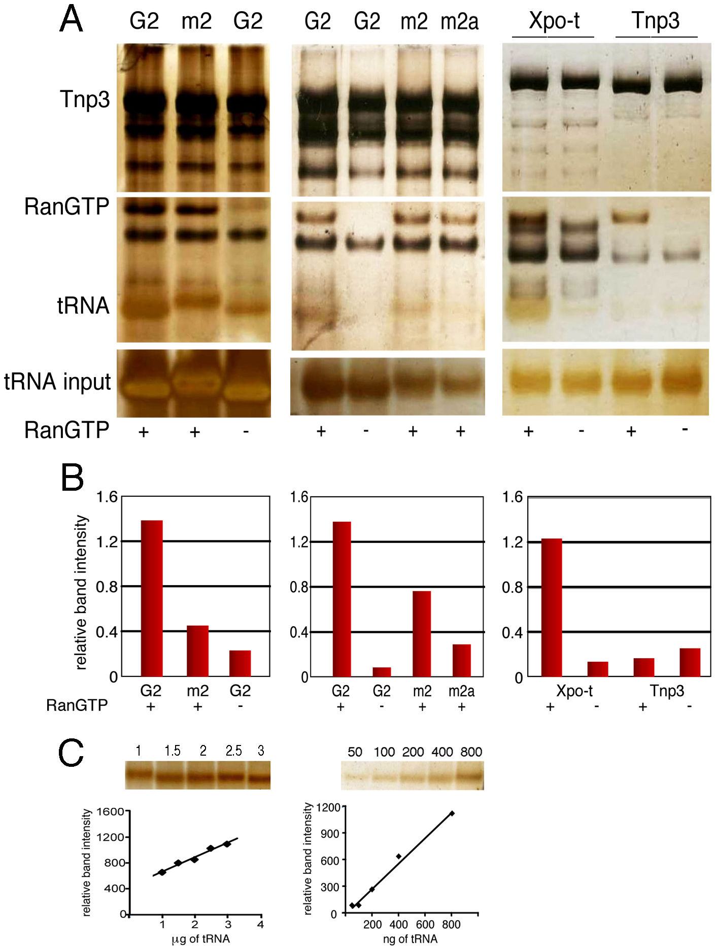 Binding of tRNAs to Tnp3 is influenced by the 3′ CCA end.