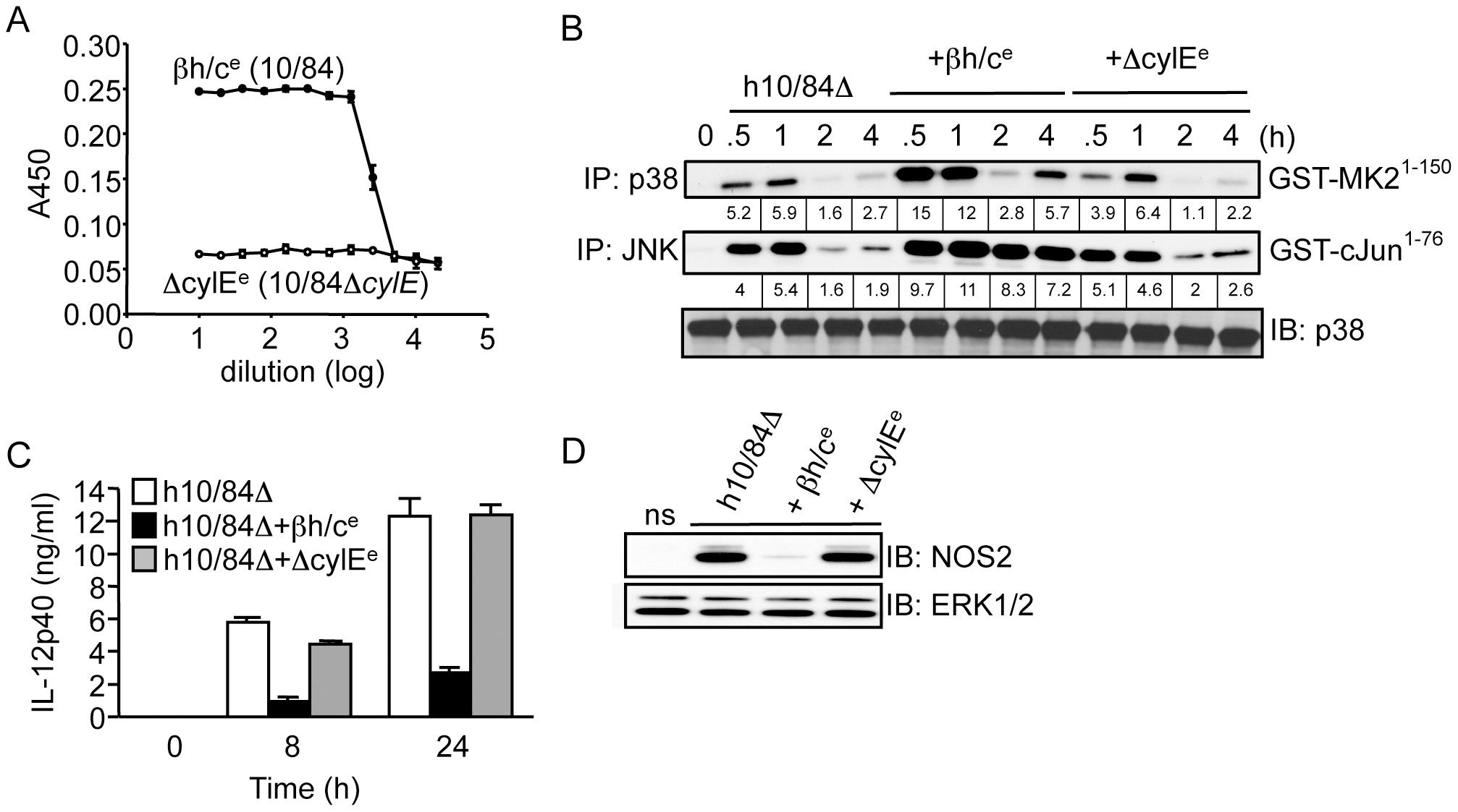 Partially purified βh/c triggers MAPK activation and inhibits IL-12 and NOS2 expression in macrophages.