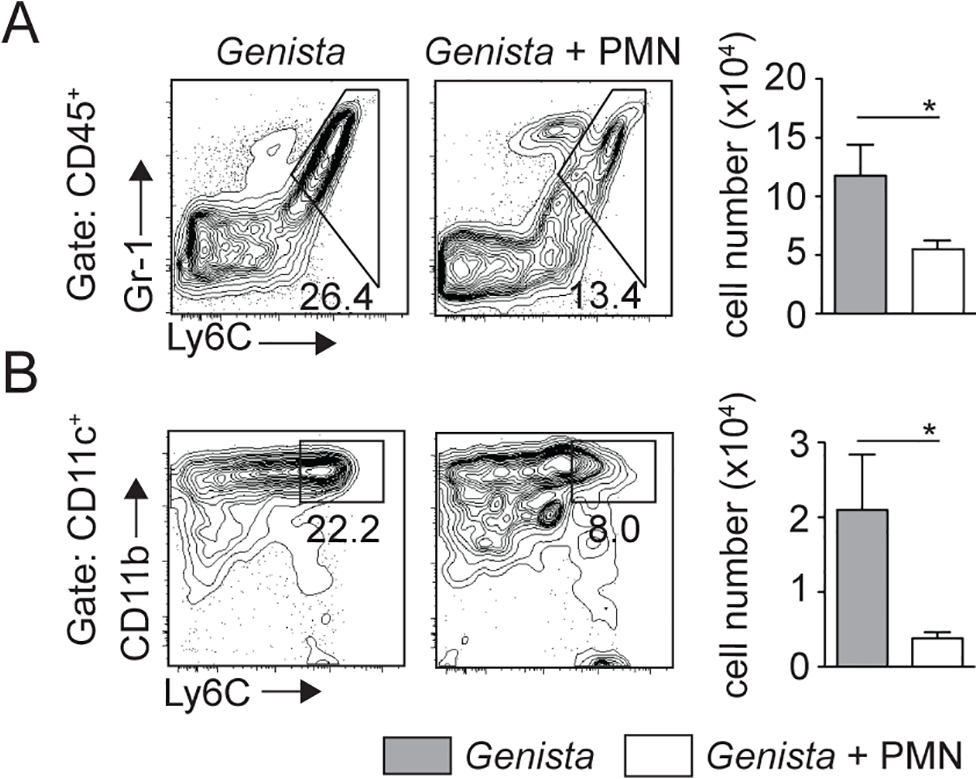 Injection of WT neutrophils in <i>Genista</i> mice reduces the otherwise observed monocyte recruitment at the site of <i>L</i>. <i>mexicana</i> inoculation.