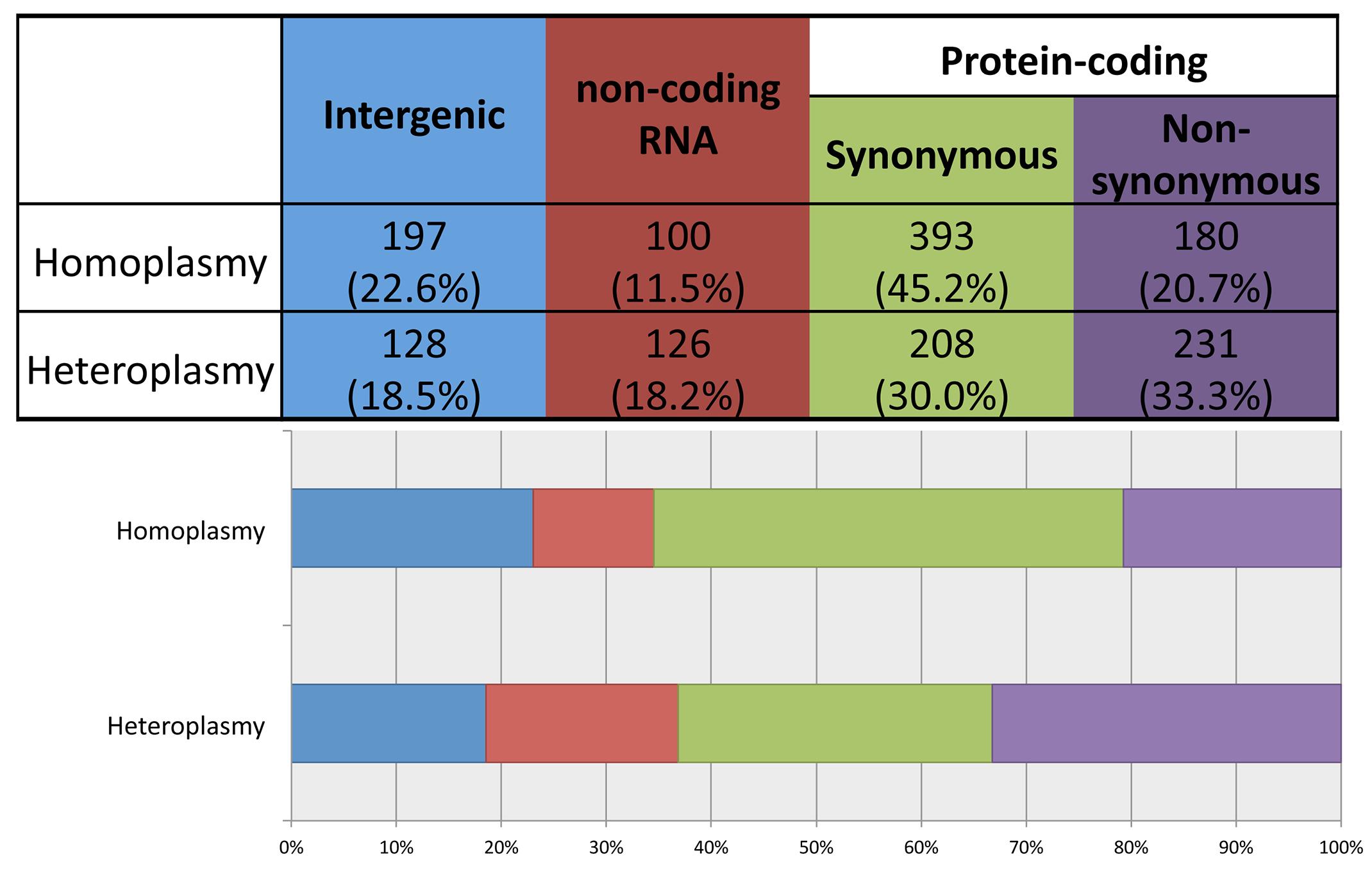 Distribution of homoplasmies and heteroplasmies in four functional categories.
